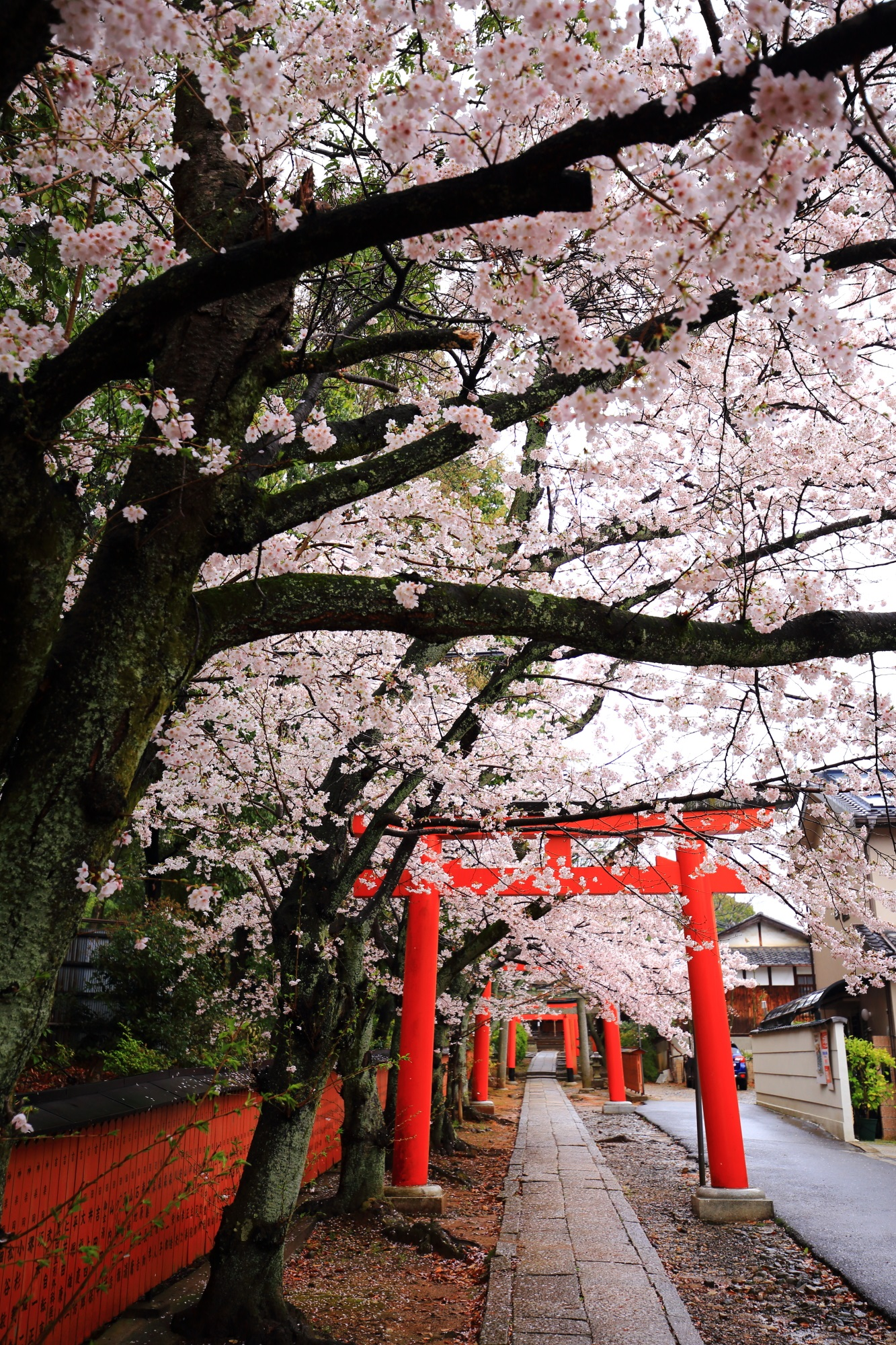 風情と華やかさの競演する隠れた桜の名所