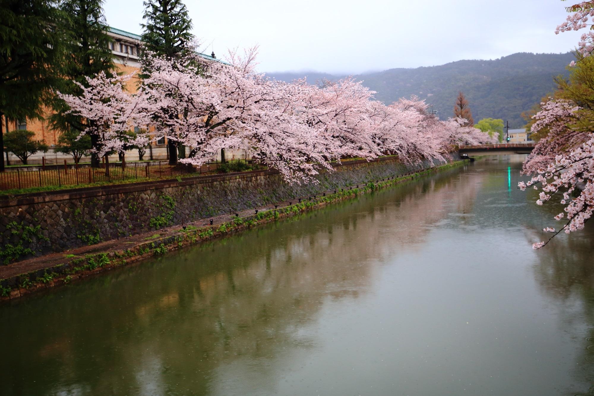 満開の桜につつまれた桜の名所の岡崎疏水