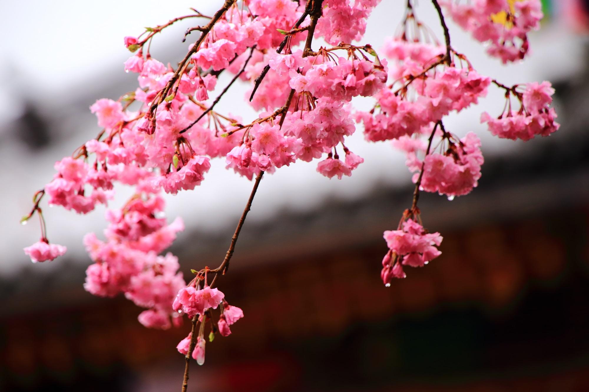 小さく可愛い花びらをしたしだれ桜