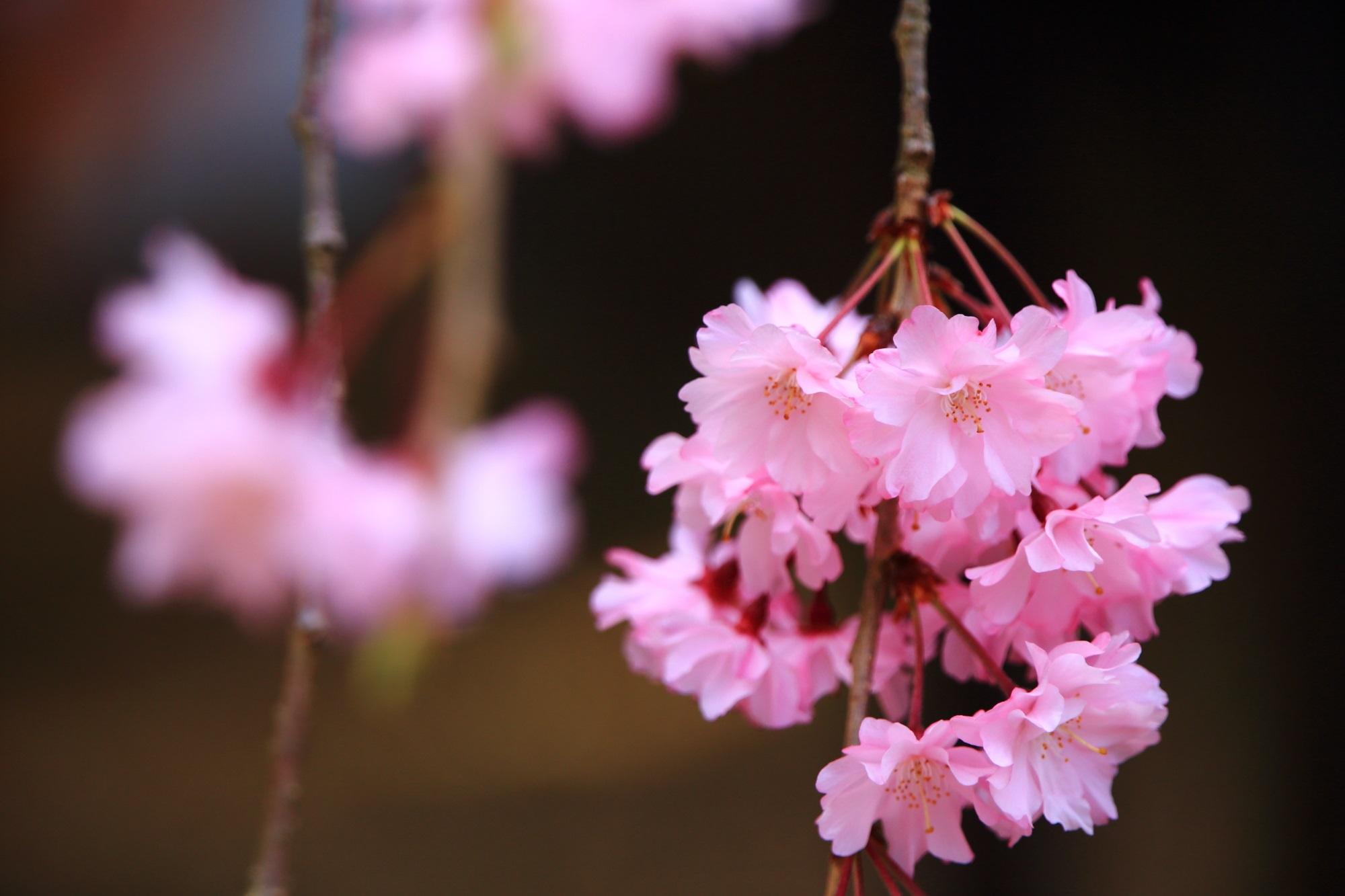 可愛いピンクの花