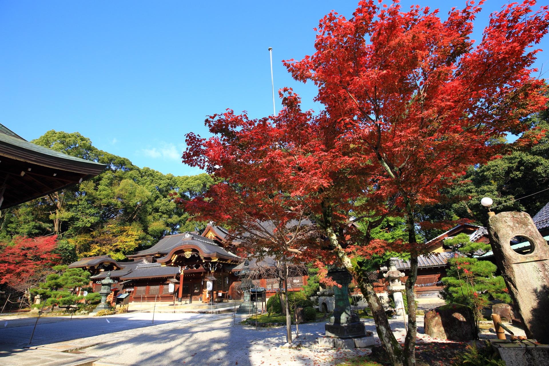 今宮神社 紅葉 玉の輿神社の秋の彩りと銀杏