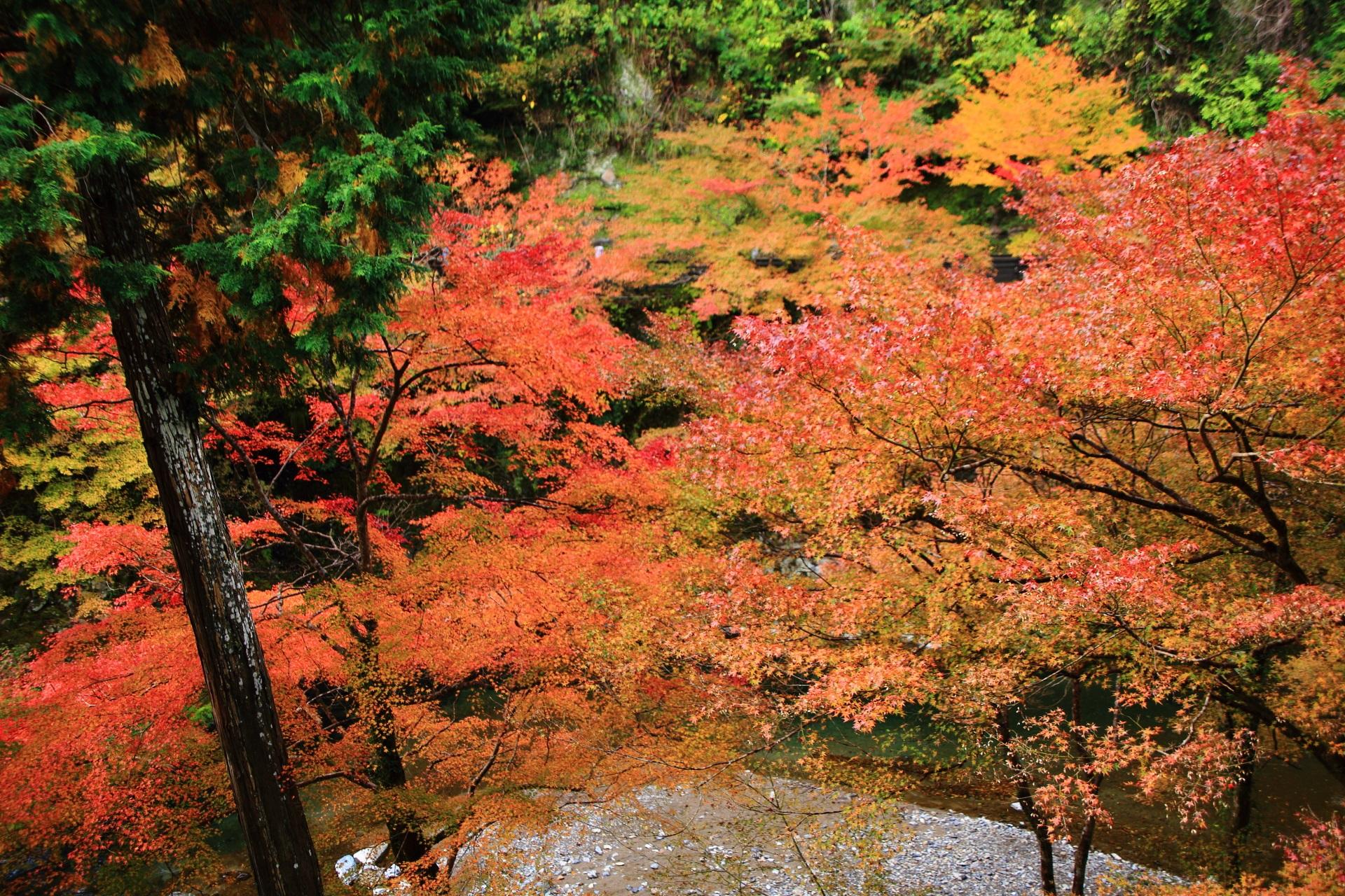 指月橋から西明寺表門まで続く石段から眺めた清滝川の紅葉