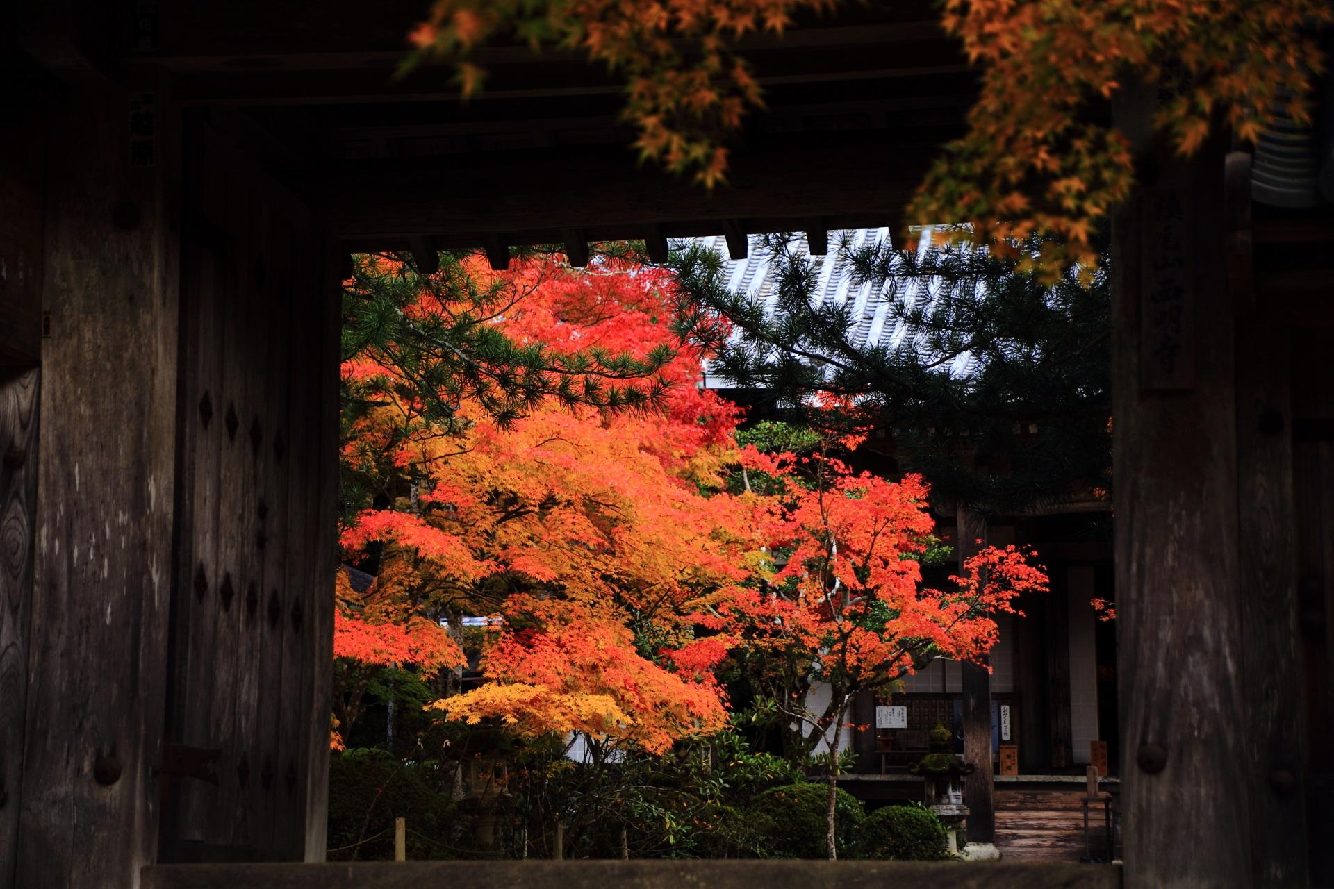 西明寺の落ち着いた境内を彩る艶やかな紅葉