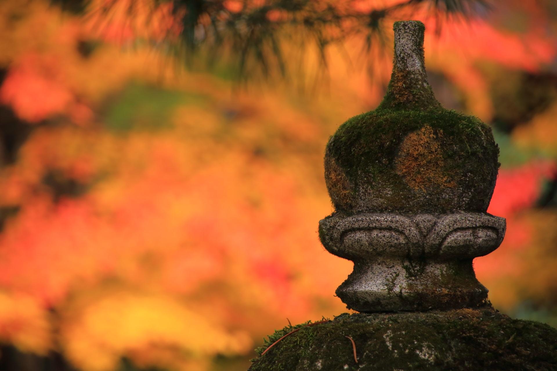 燈籠の向こうで広がる淡く美しい秋色
