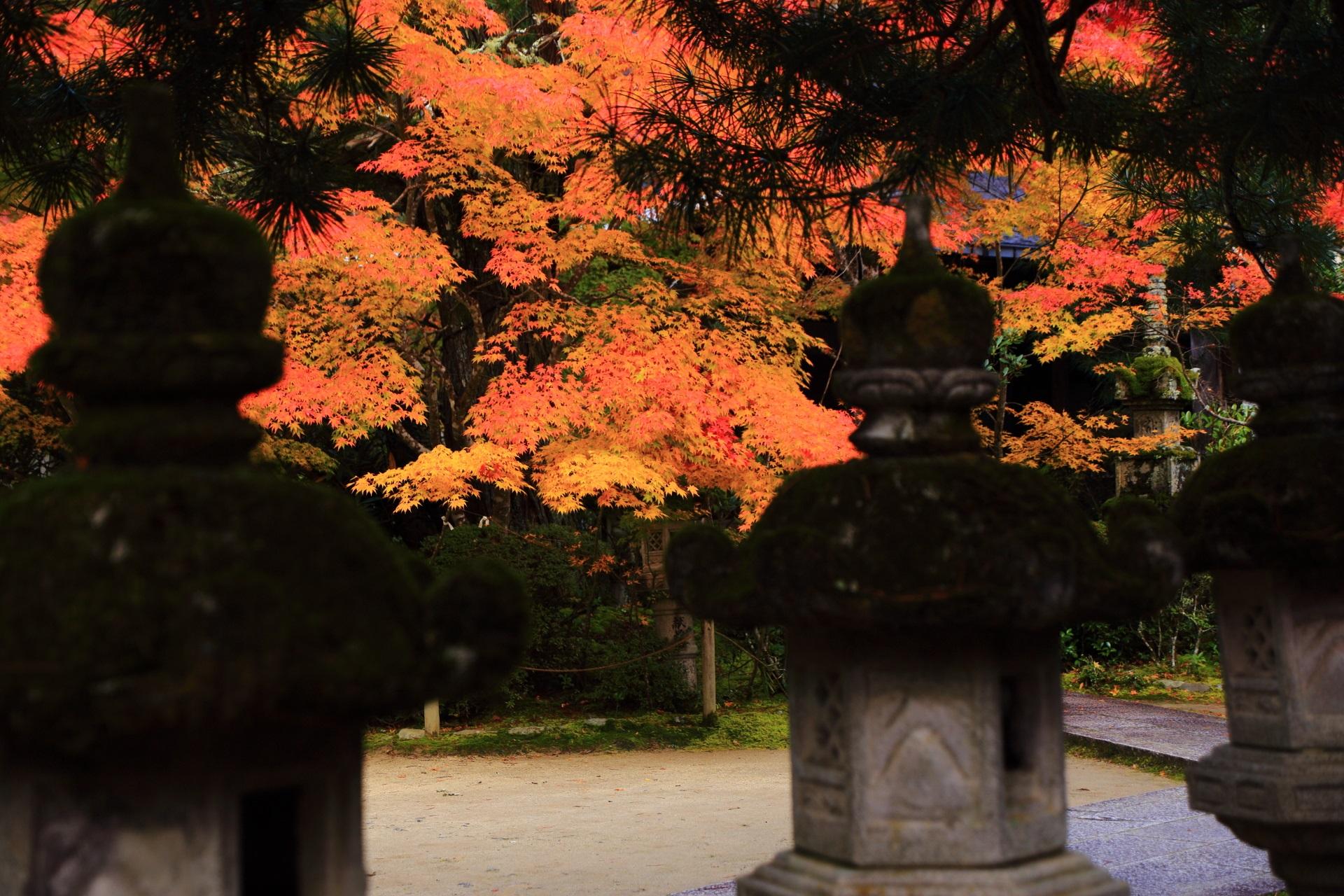 燈籠越しに眺めた紅葉