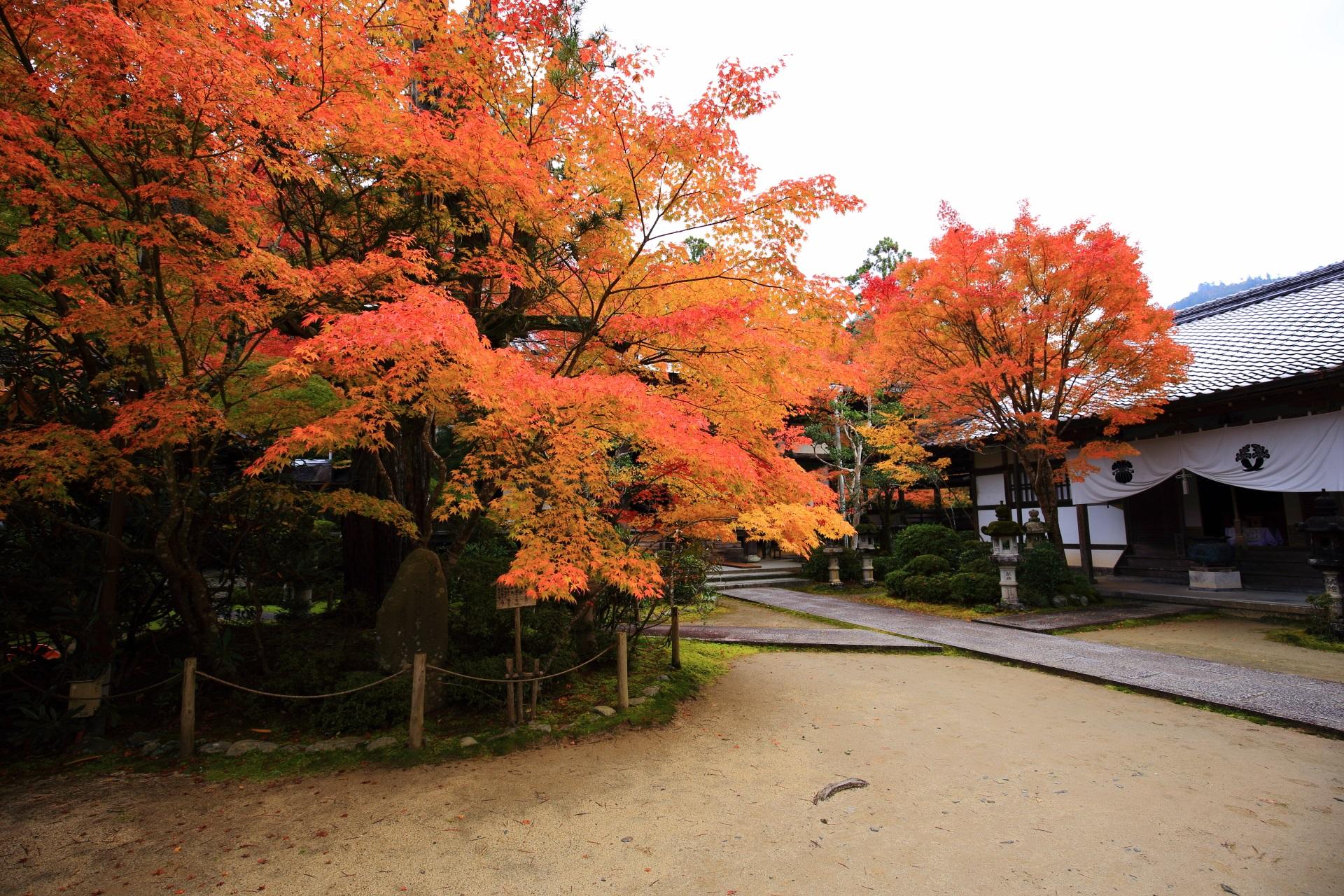 溢れんばかりの鮮やかなオレンジの紅葉