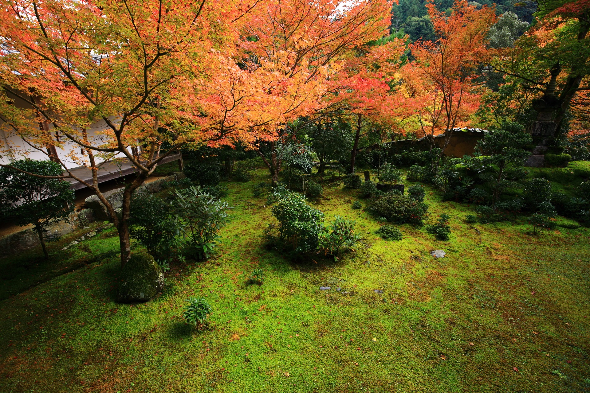 西明寺の方丈庭園の広がる苔を彩る淡い紅葉