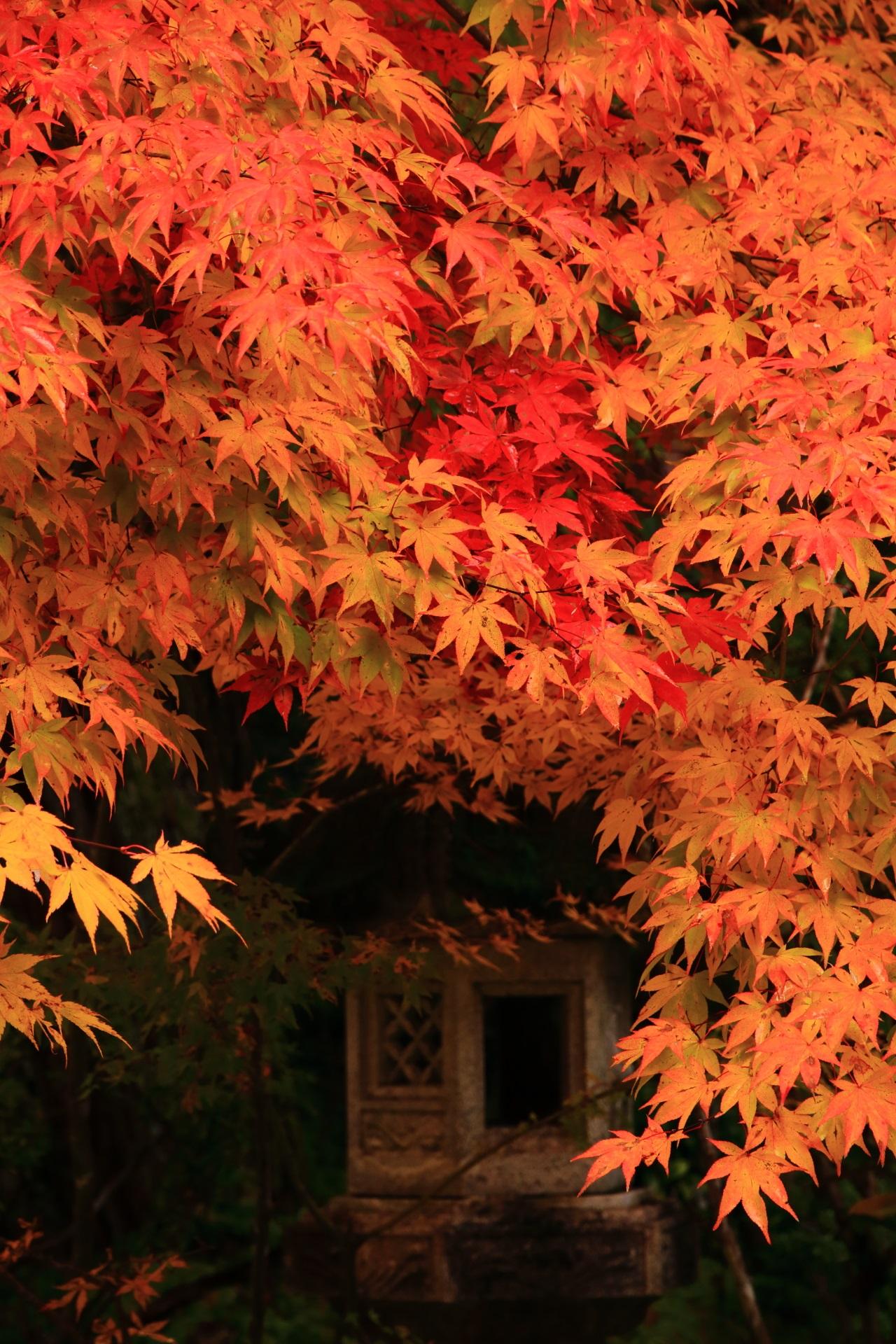 西明寺の素晴らしい色合いの極上の紅葉