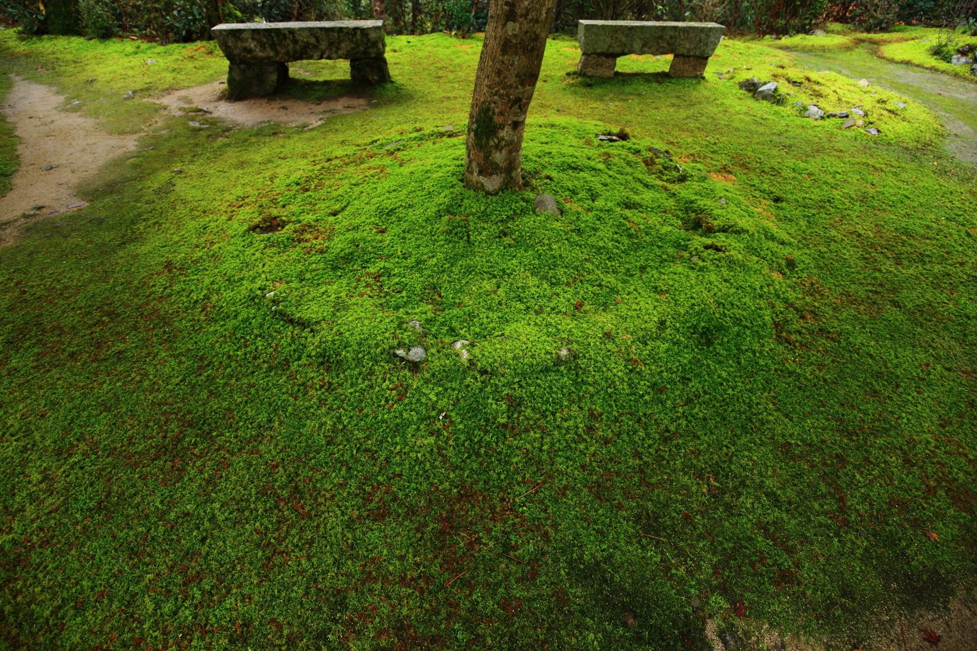 西明寺の鮮やかな緑の絨毯のように広がる綺麗な苔