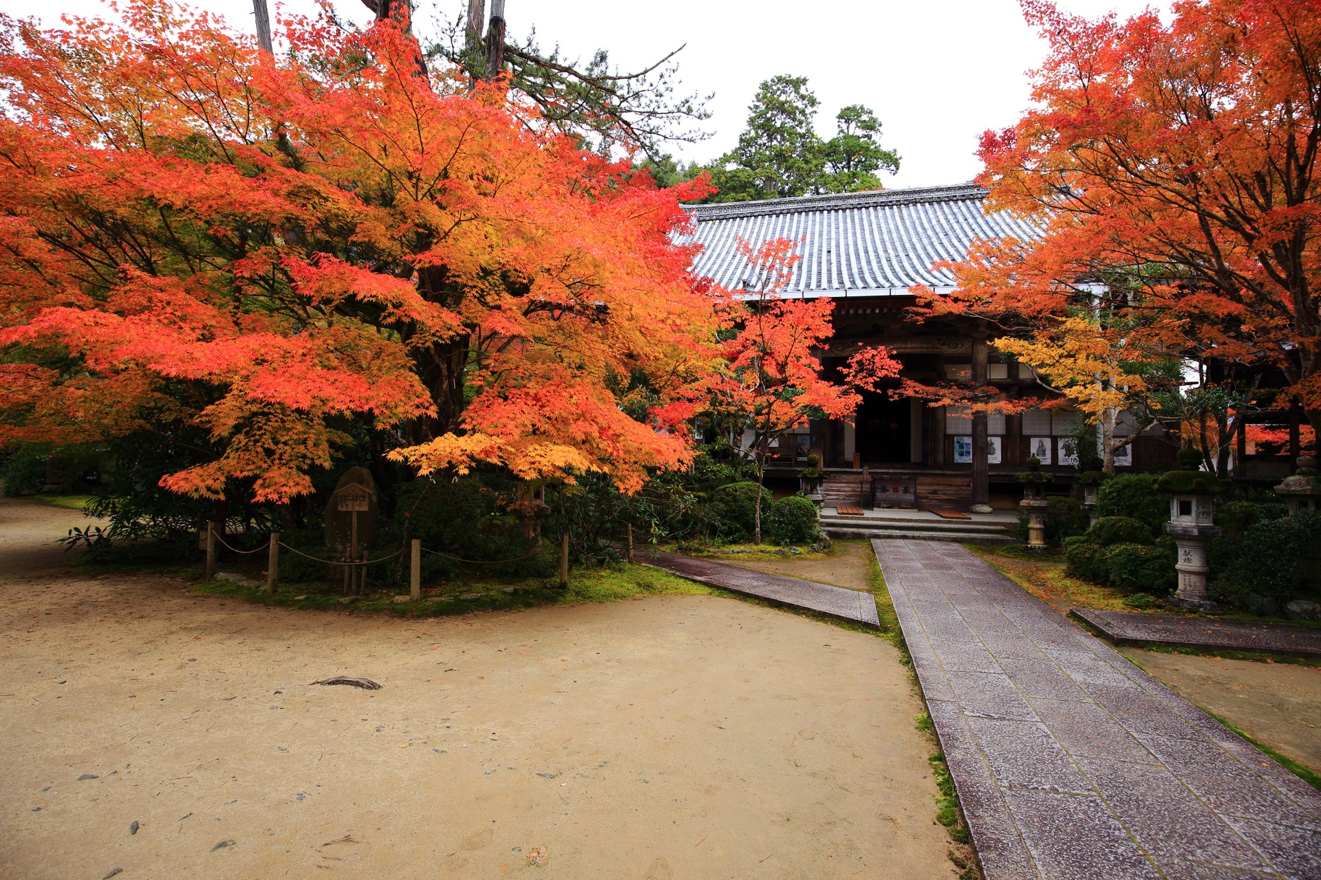 西明寺の本堂と豪快に色づく紅葉