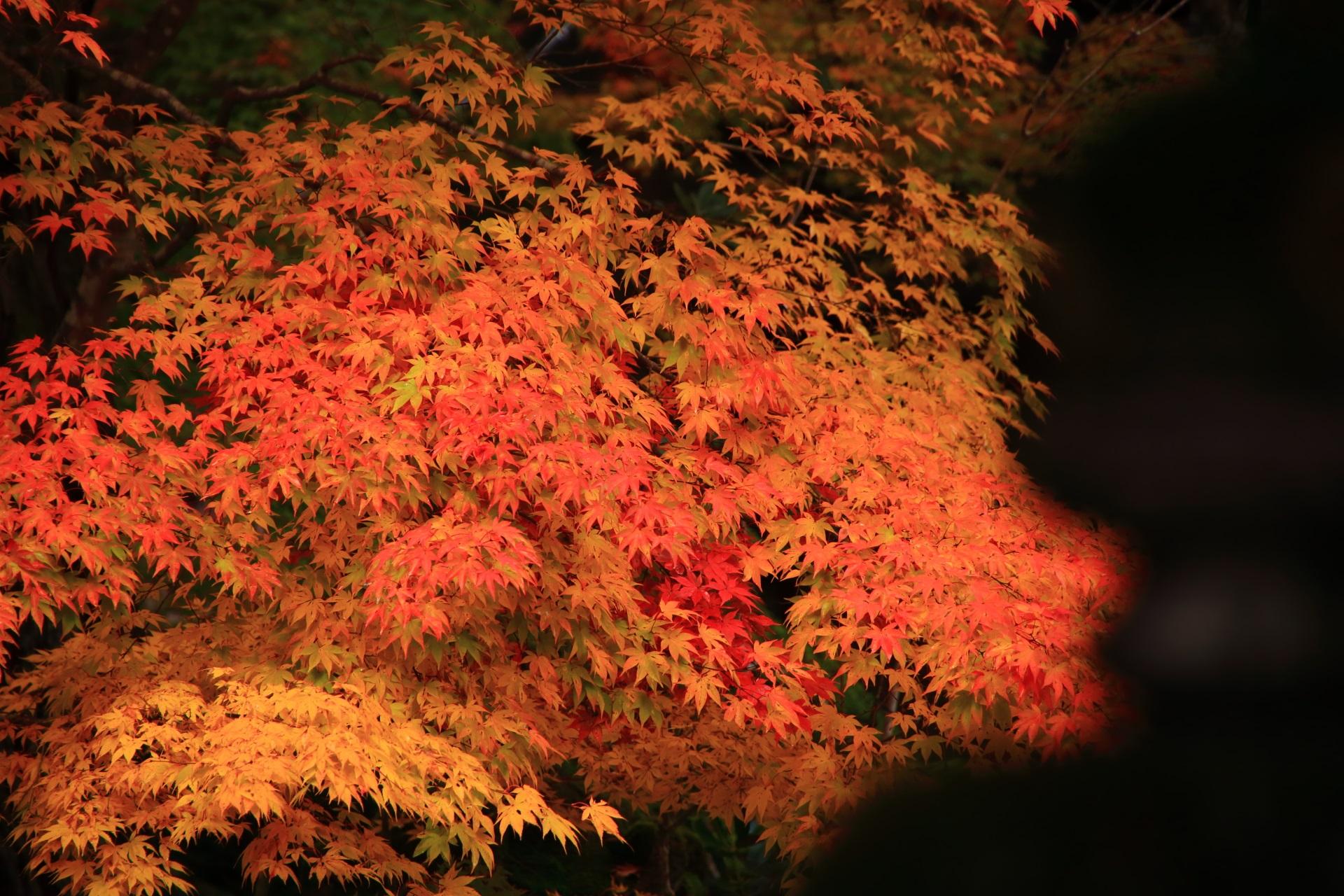 流れるような彩りのオレンジ系の紅葉