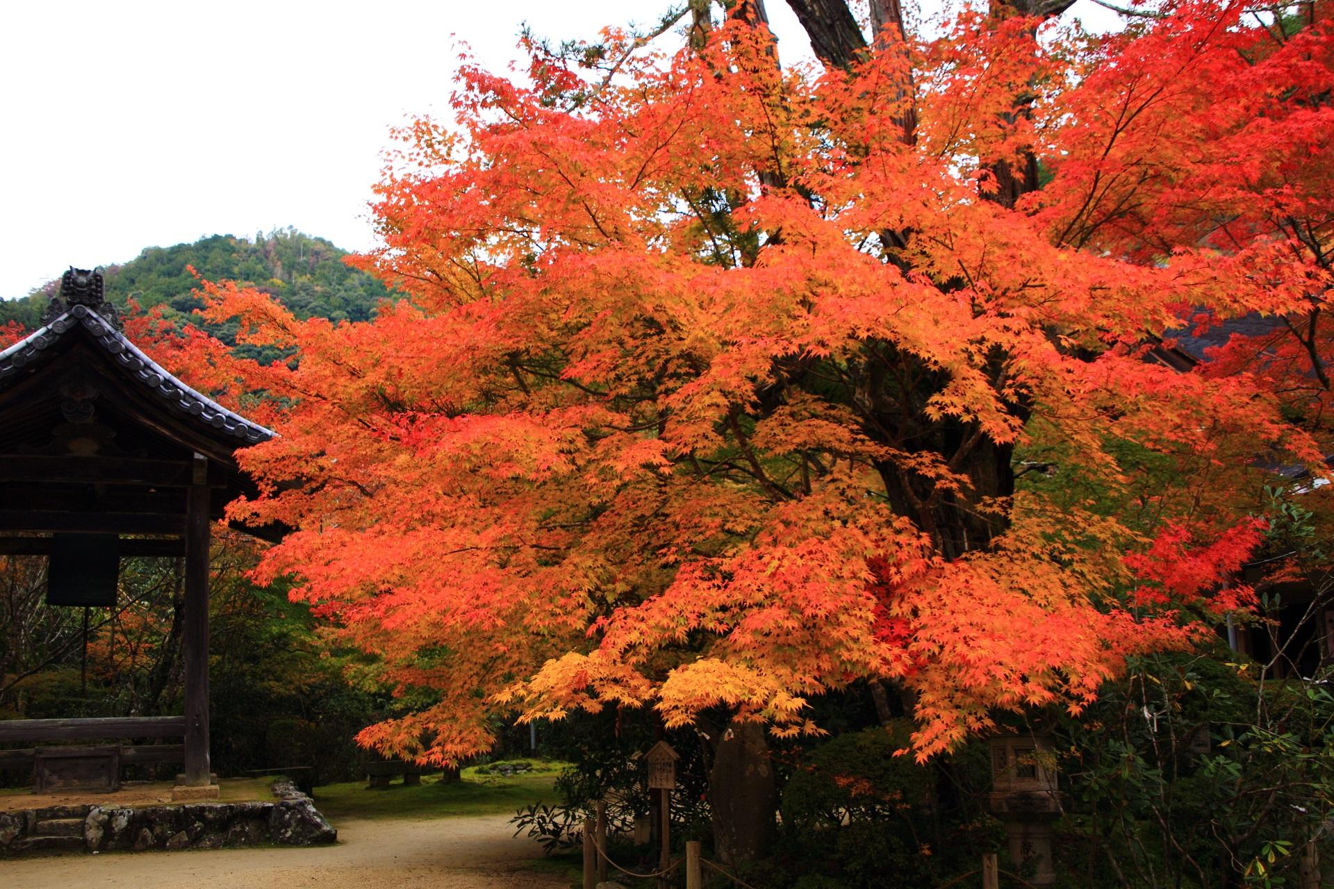 西明寺の鐘楼と息をのむ圧巻の紅葉