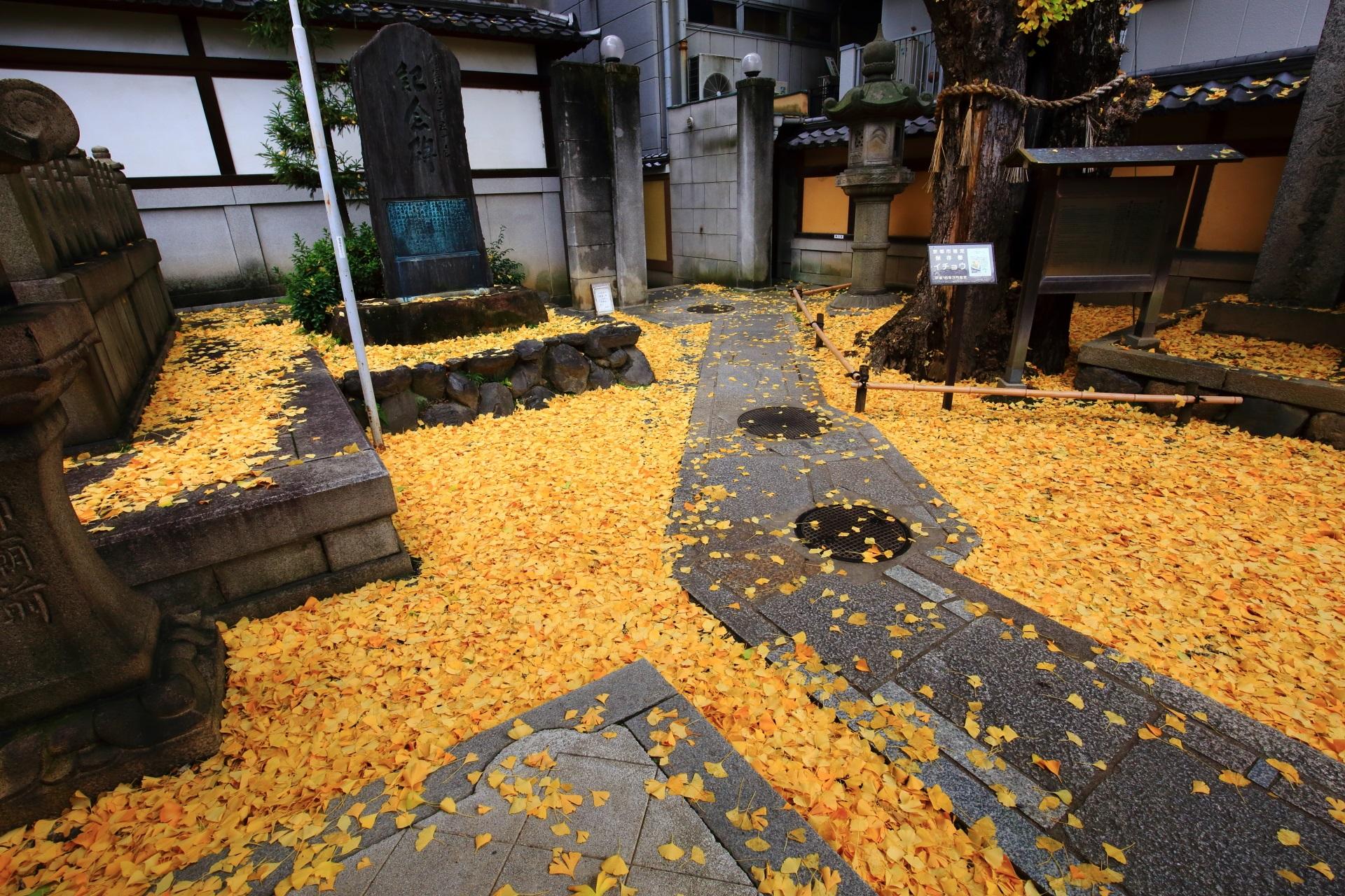 本能寺 銀杏 京都を大火から守った火伏せの銀杏