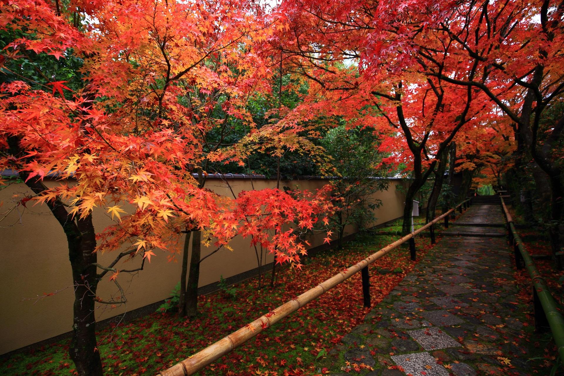 光悦寺 紅葉 鷹峯の美しすぎる紅葉の参道