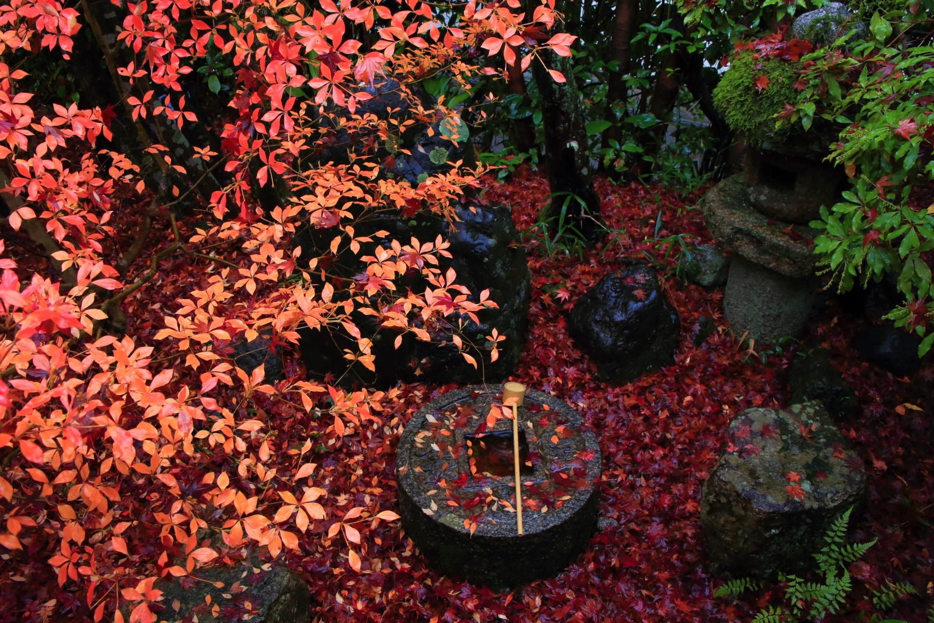 金福寺 散り紅葉 洛北の風情ある晩秋の彩り