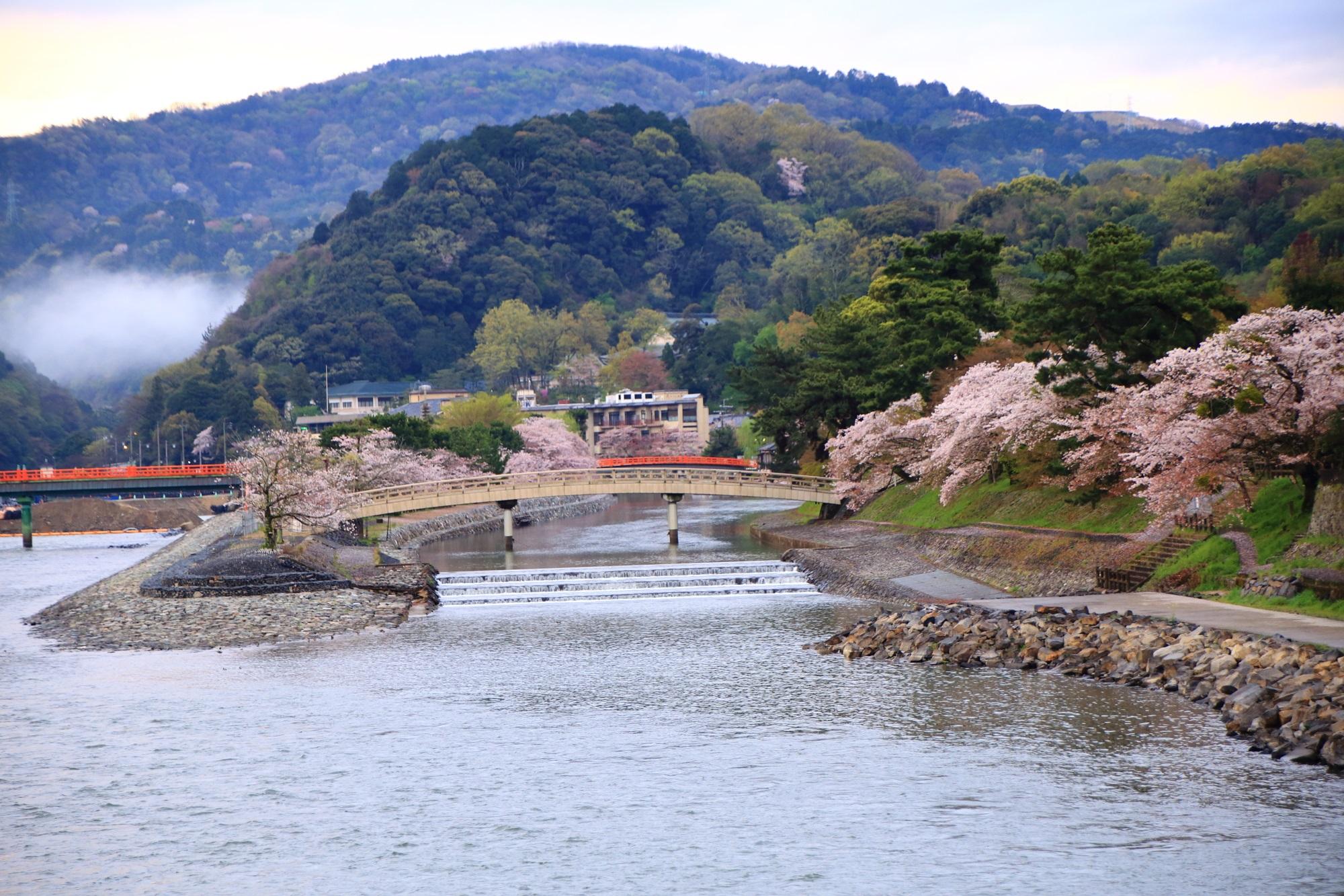 宇治橋から眺めた上流方面の宇治川と桜