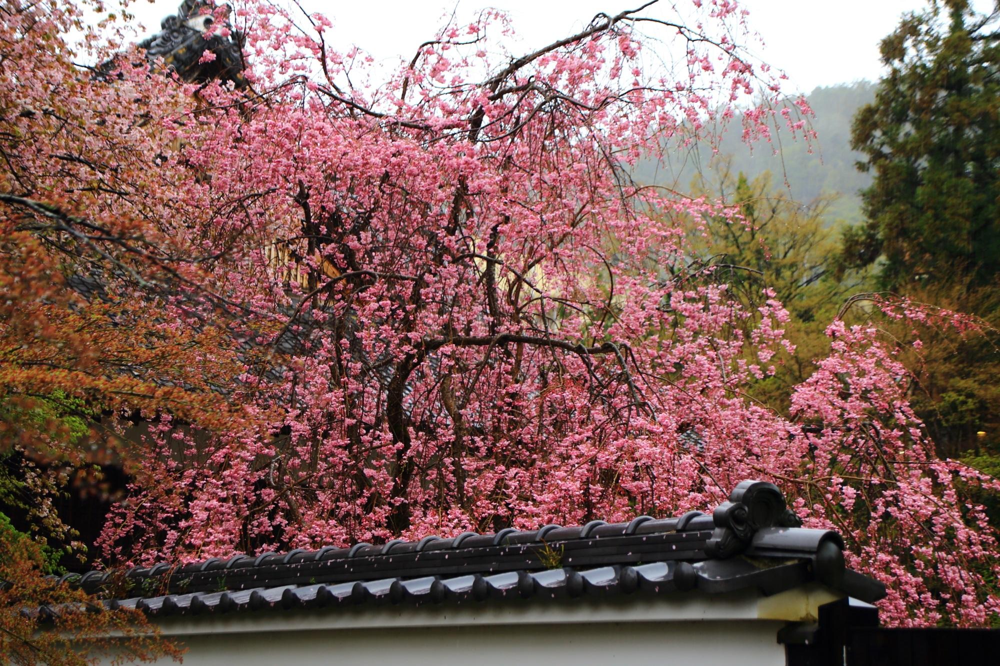 外から見える石庭のしだれ桜