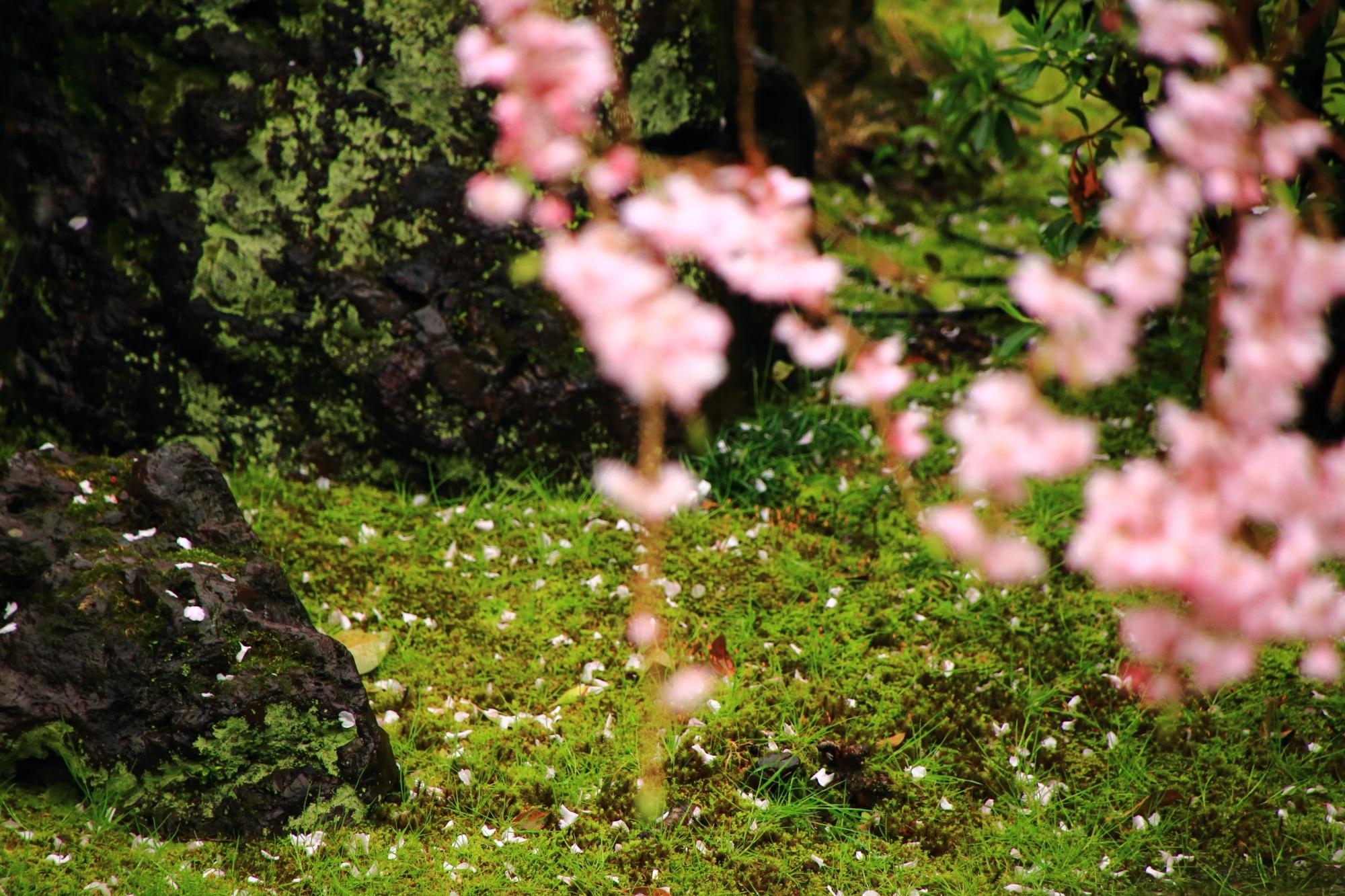 祇園の桜の穴場の正伝永源院