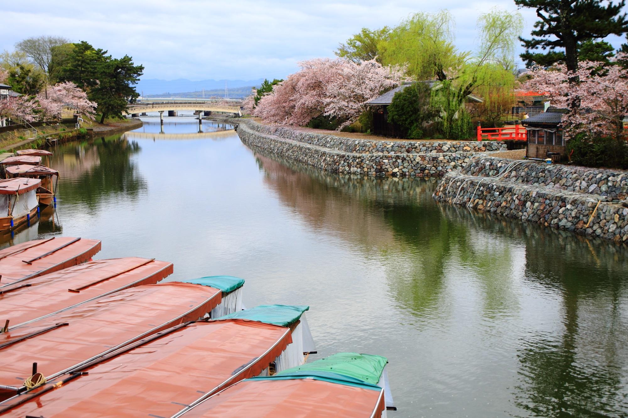 情緒ある水辺を彩る桜