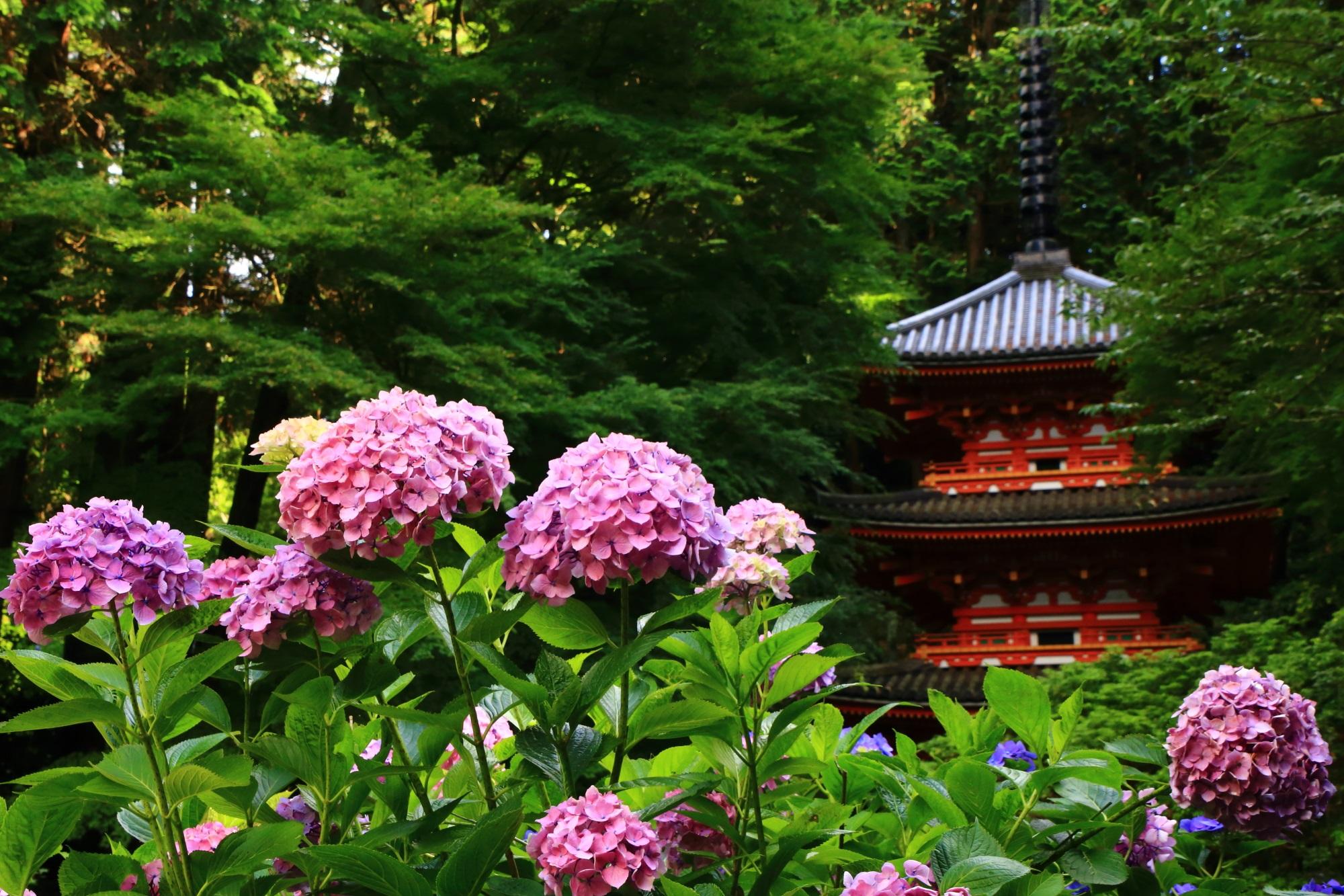 Kyoto Kizugawa Gansen-ji Temple hydrangea
