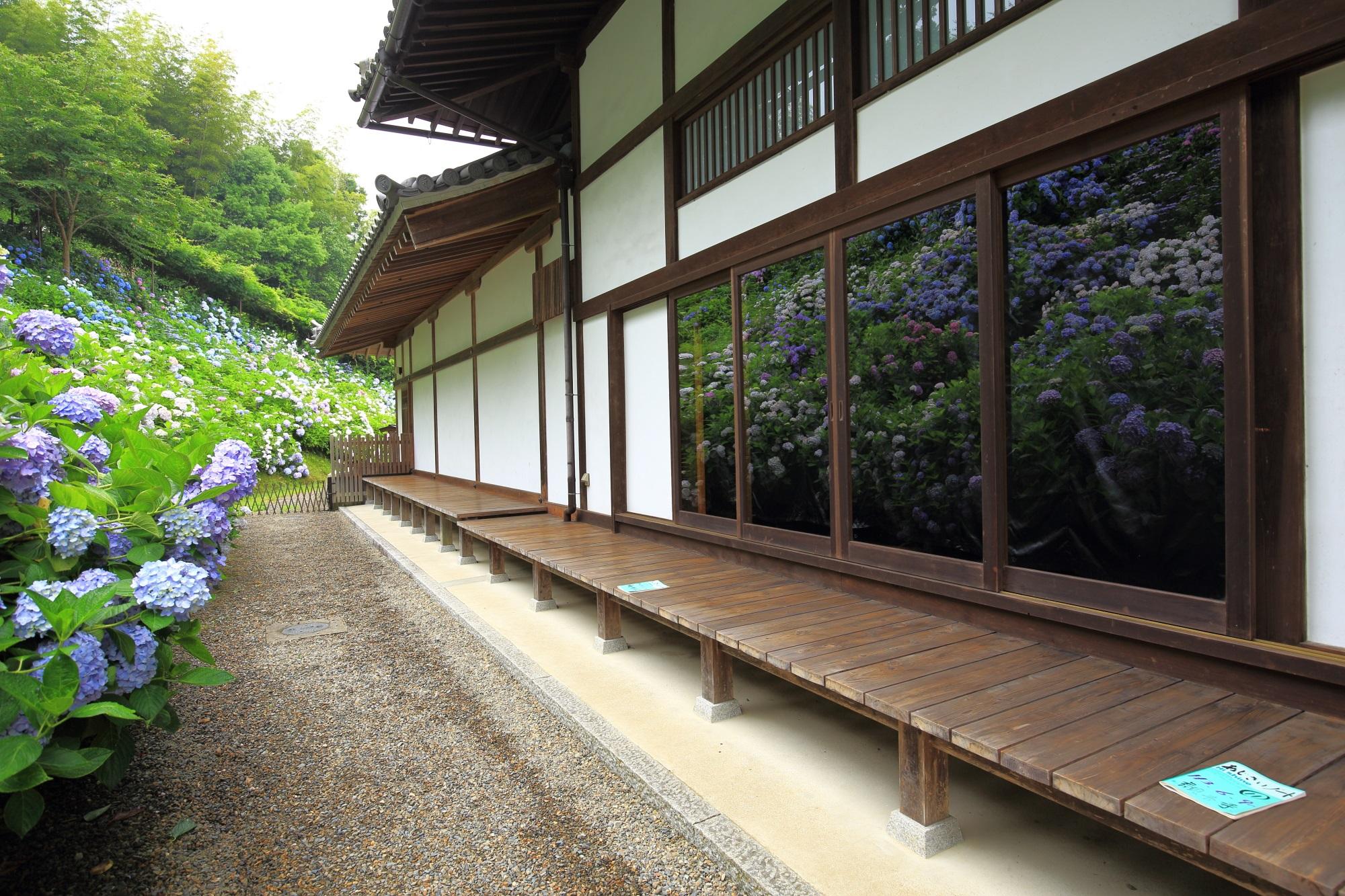 丹州観音寺の伽藍(寺務所)の縁側向かいにある紫陽花の山