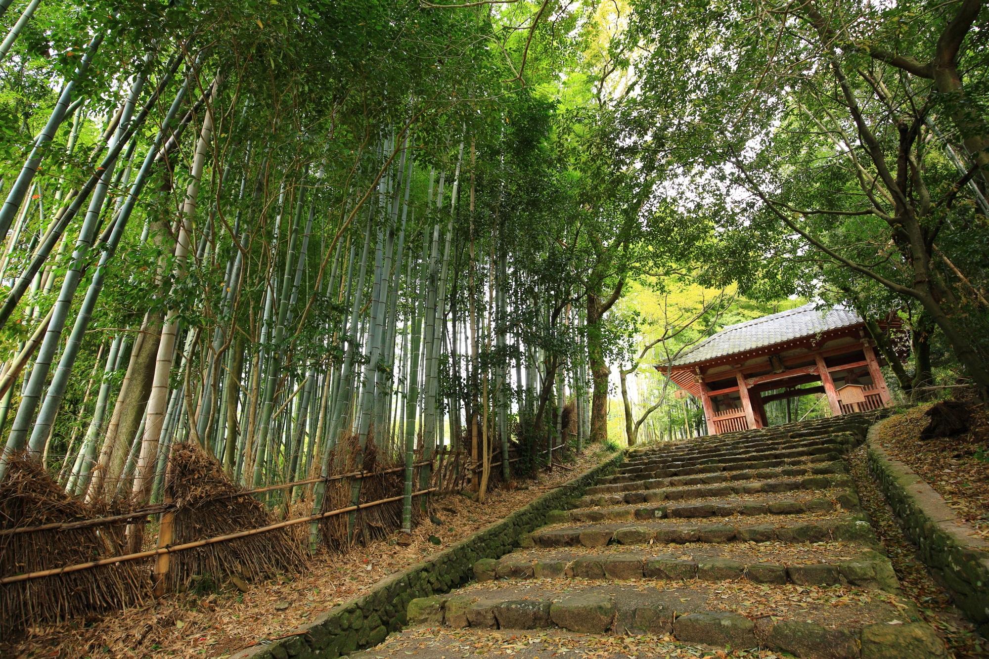 勝持寺の竹林と仁王門