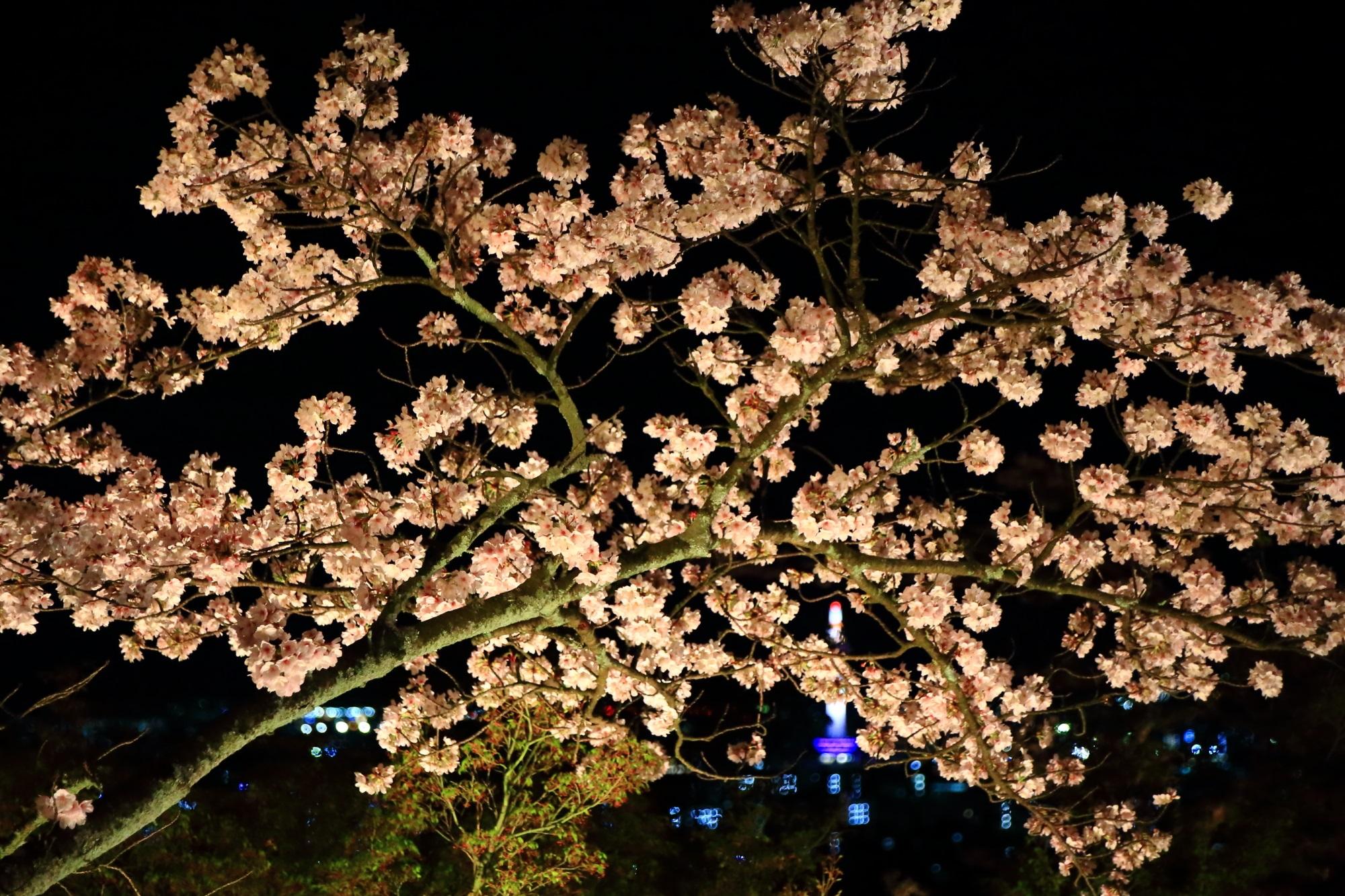 闇夜と京都の夜景を彩る夜桜