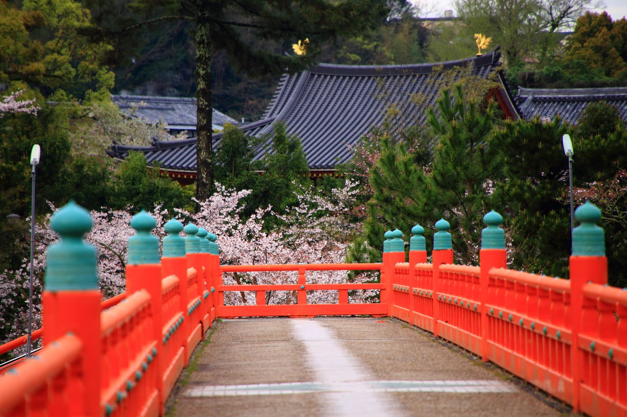 朝霧橋から眺める手前に溢れる桜と平等院鳳凰堂