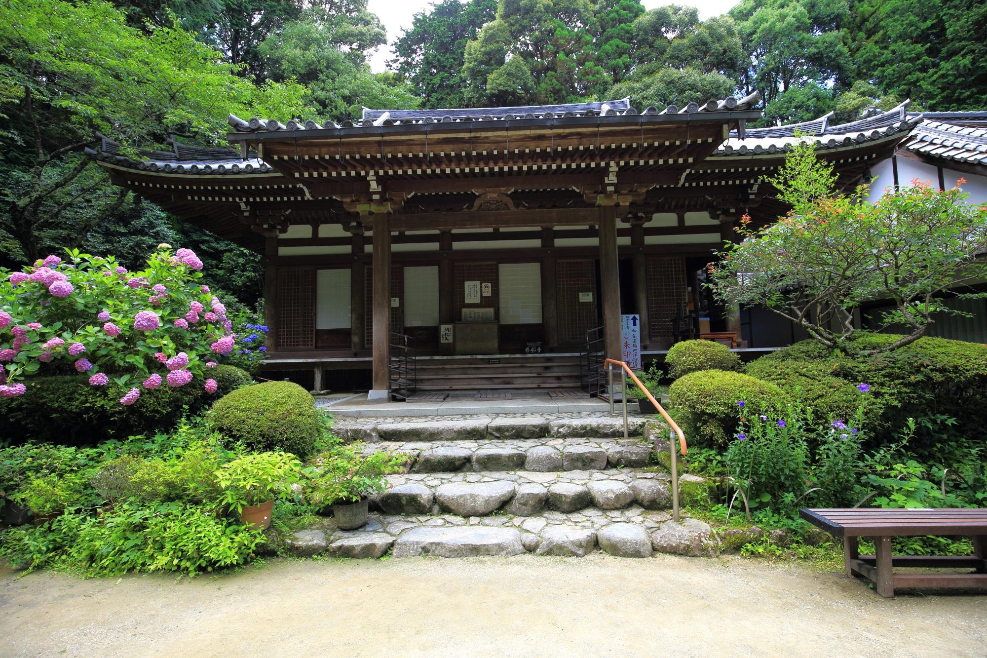 立派に構える岩船寺の本堂と紫陽花