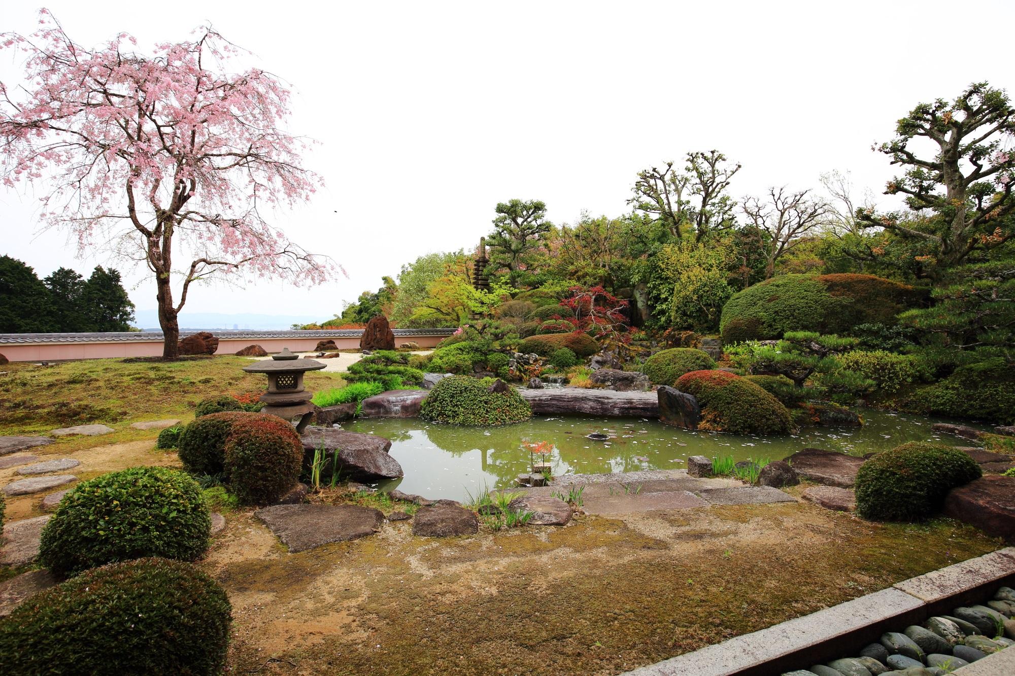 庭園の中央で咲き誇る満開のしだれ桜