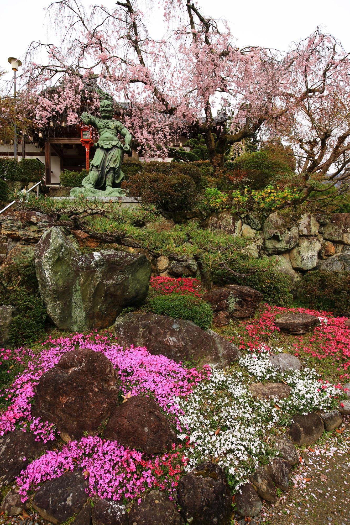 正法寺の春日不動明王のしだれ桜と芝桜
