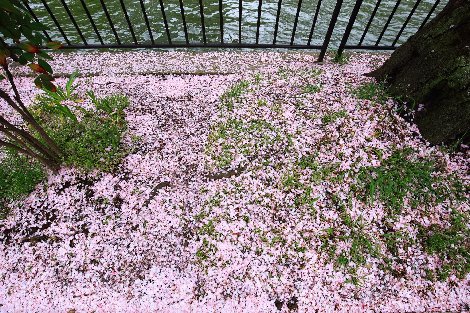 緑とピンクの春色の自然の絨毯