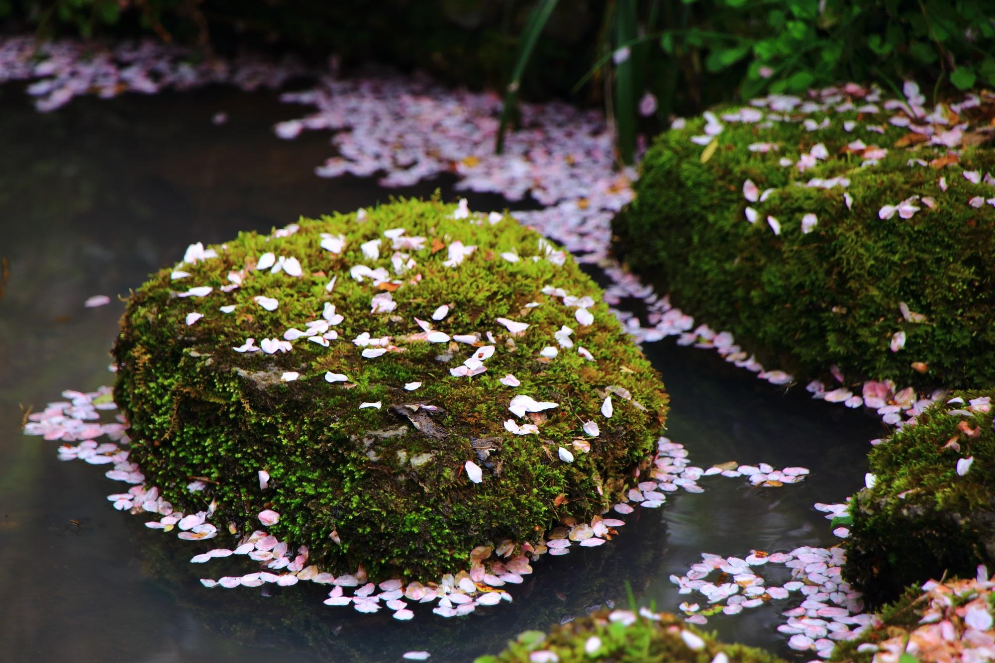 苔や岩の上にも優雅に散る花びら