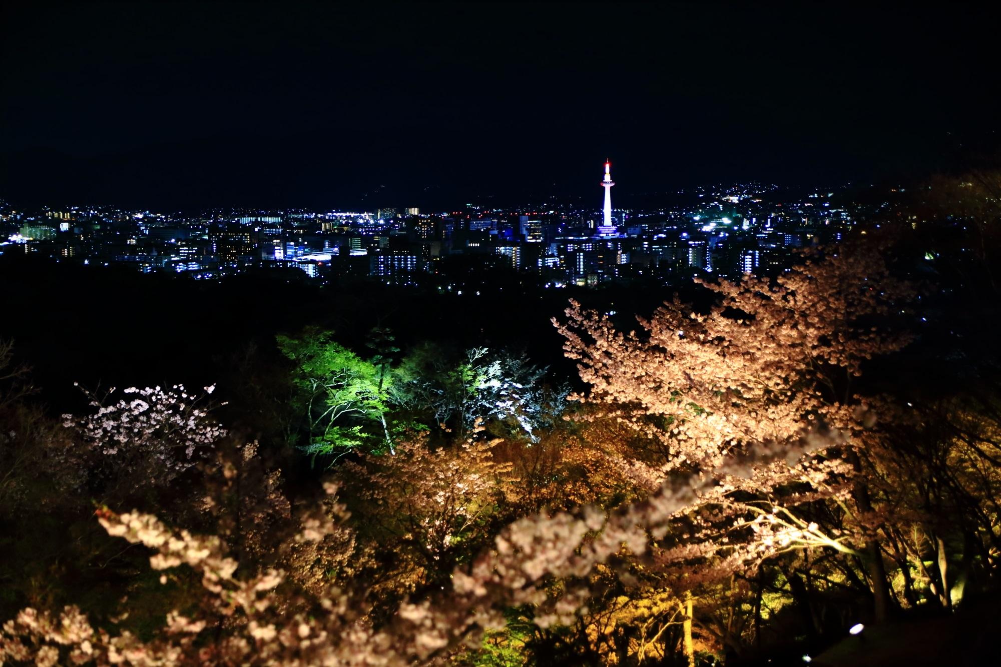 夜桜が演出する綺麗な京都タワーや京都市街の夜景