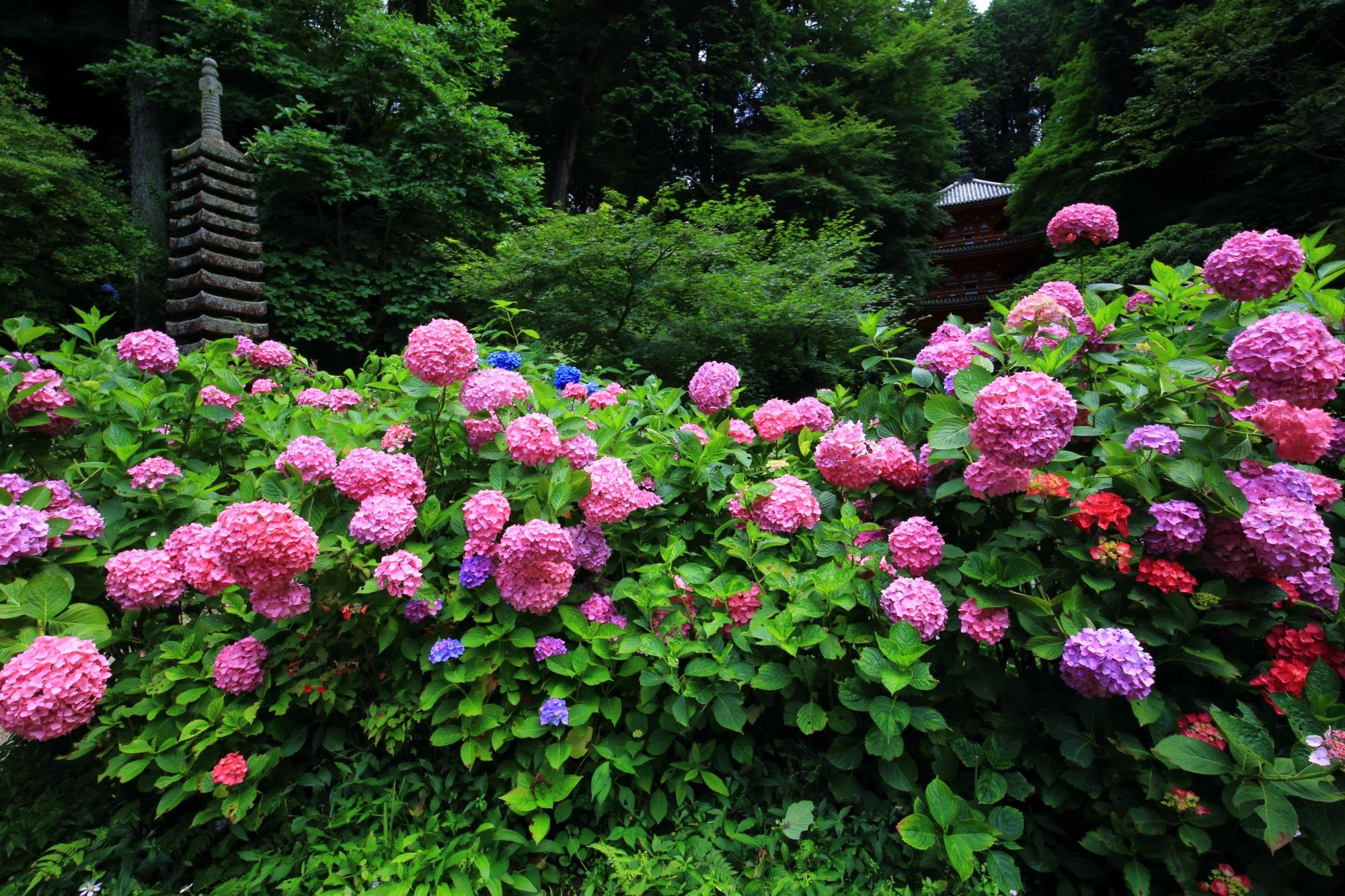 岩船寺の三重塔と十三石塔とピンクのボールが飛び跳ねるような紫陽花