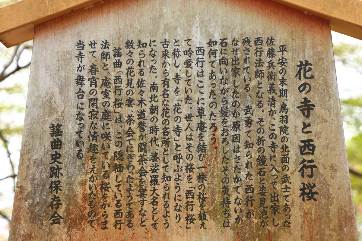 勝持寺の西行桜の説明