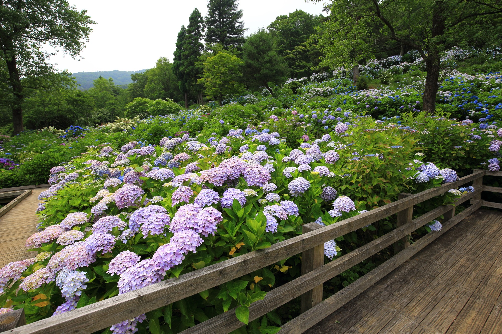 交通の便が良ければもっと人が来る舞鶴自然文化公園