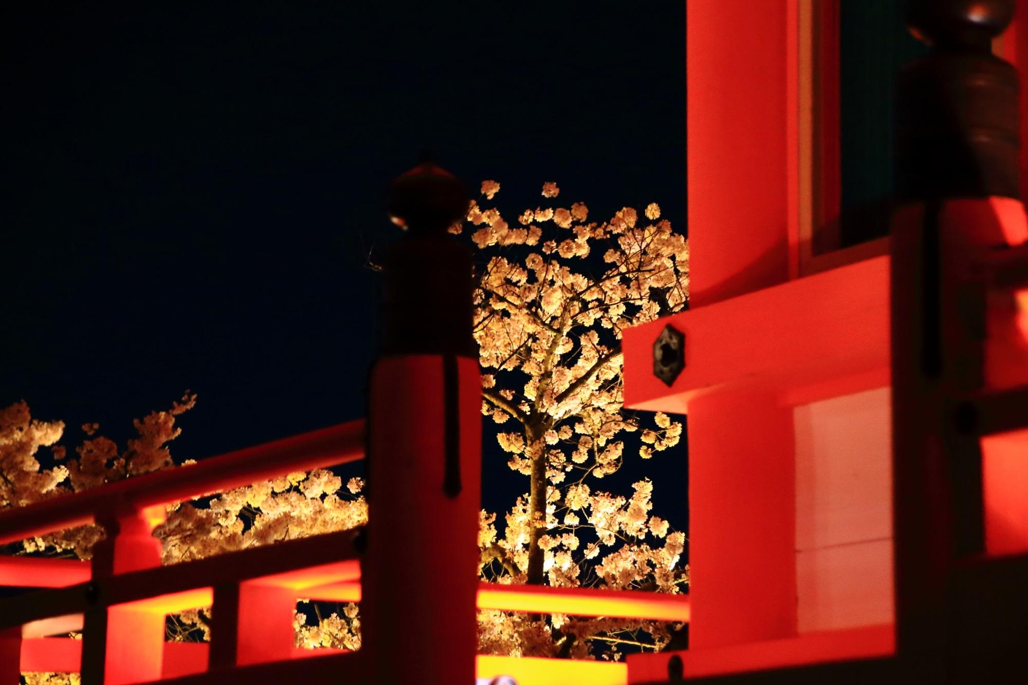 欄干から見える華やかな夜桜
