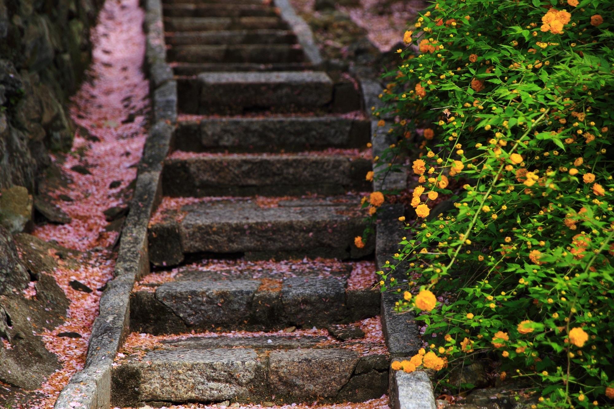 桜から山吹への季節の移り変わりが感じられる願徳寺(がんとくじ)