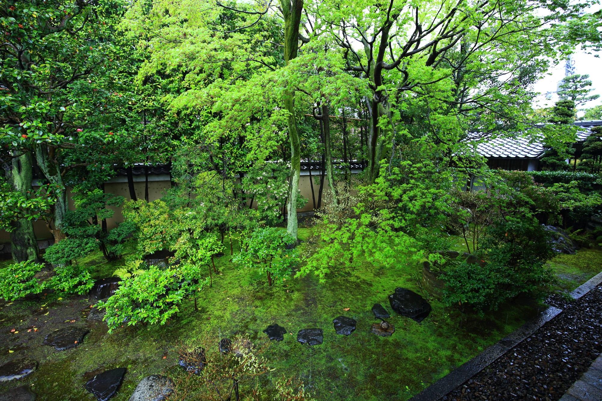 正伝永源院の新緑と苔