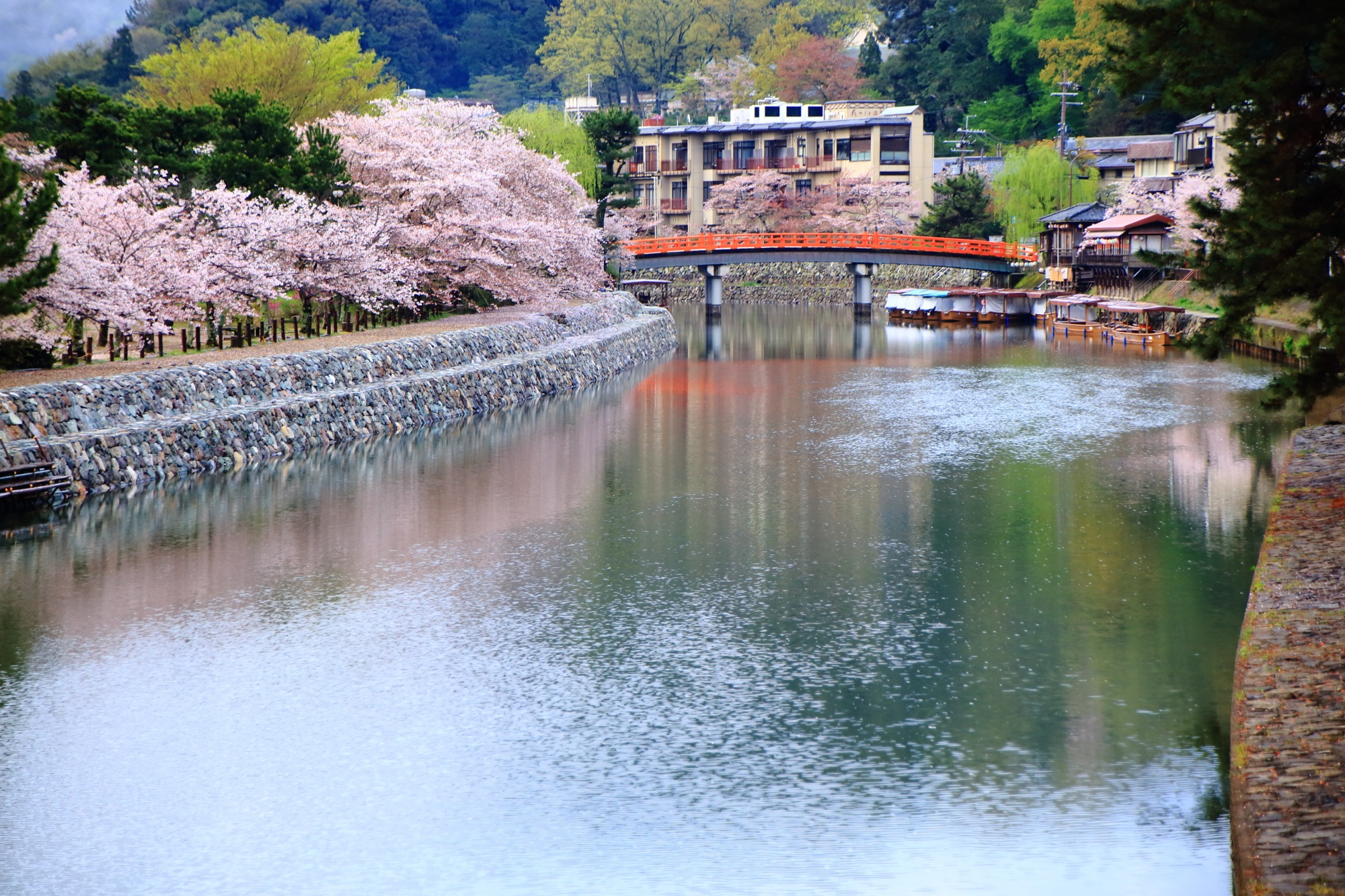 Kyoto Uji-gawa River cherry blossoms