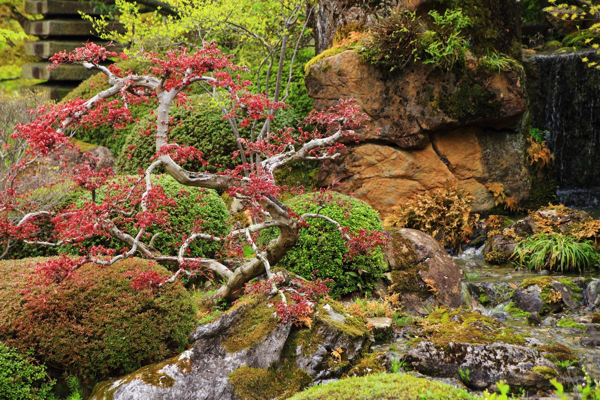 色合いも美しく良く手入れが行き届いた綺麗な庭園の宝生苑