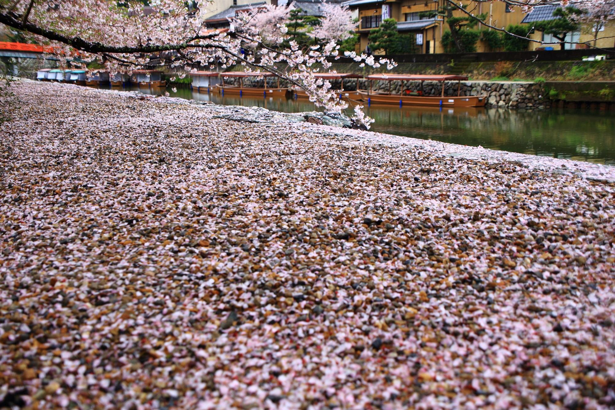 砂の上を覆う一面の散り桜