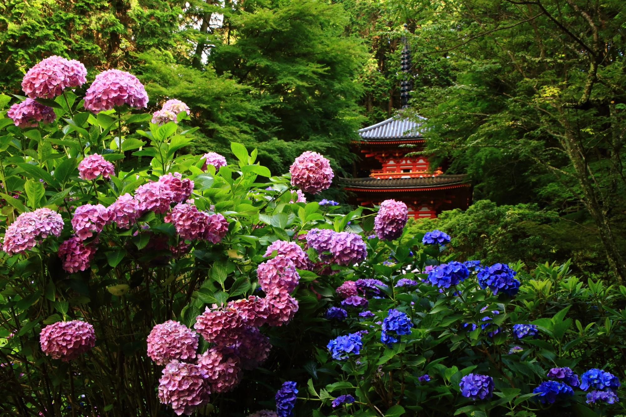岩船寺の素晴らしすぎる紫陽花と初夏の情景