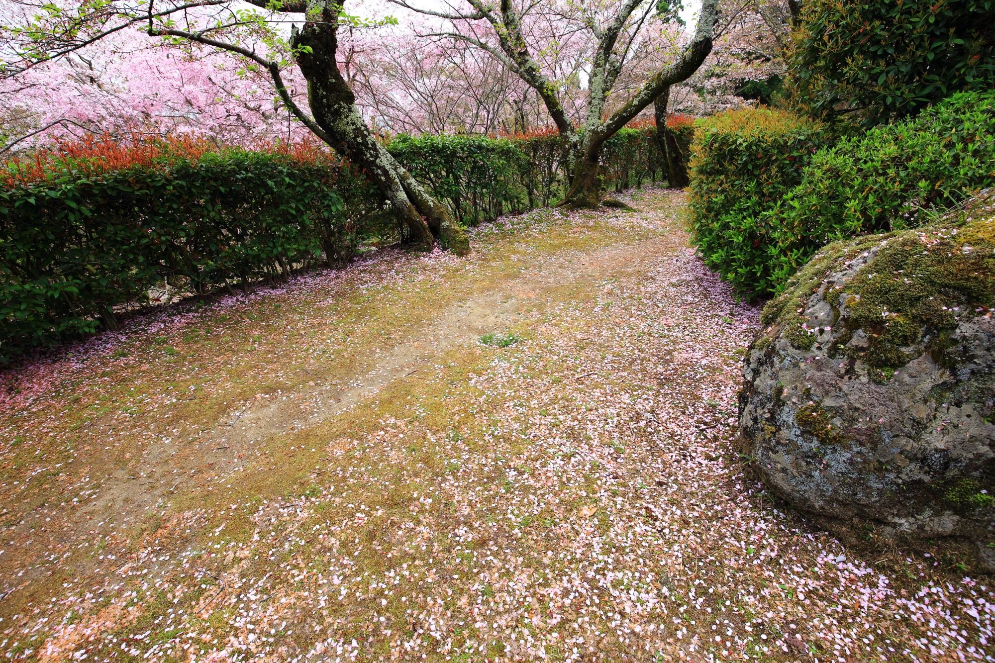 上から眺めた桜ヶ丘のしだれ桜