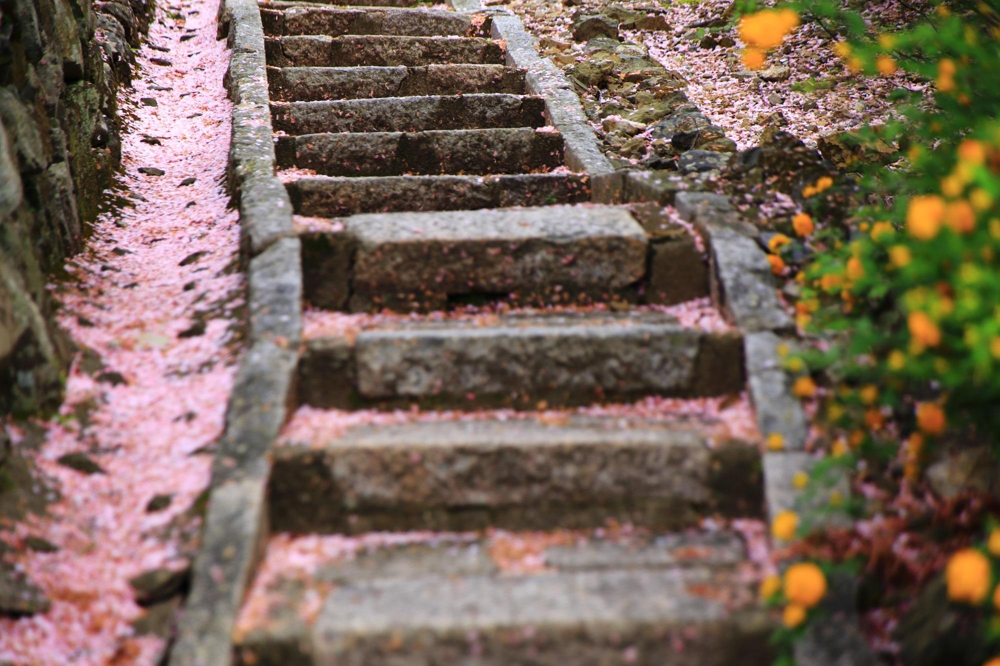 願徳寺の見事な散り桜