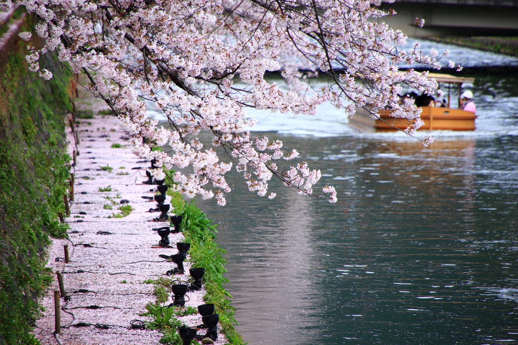 桜の岡崎疏水を通る遊覧の船(十石船)