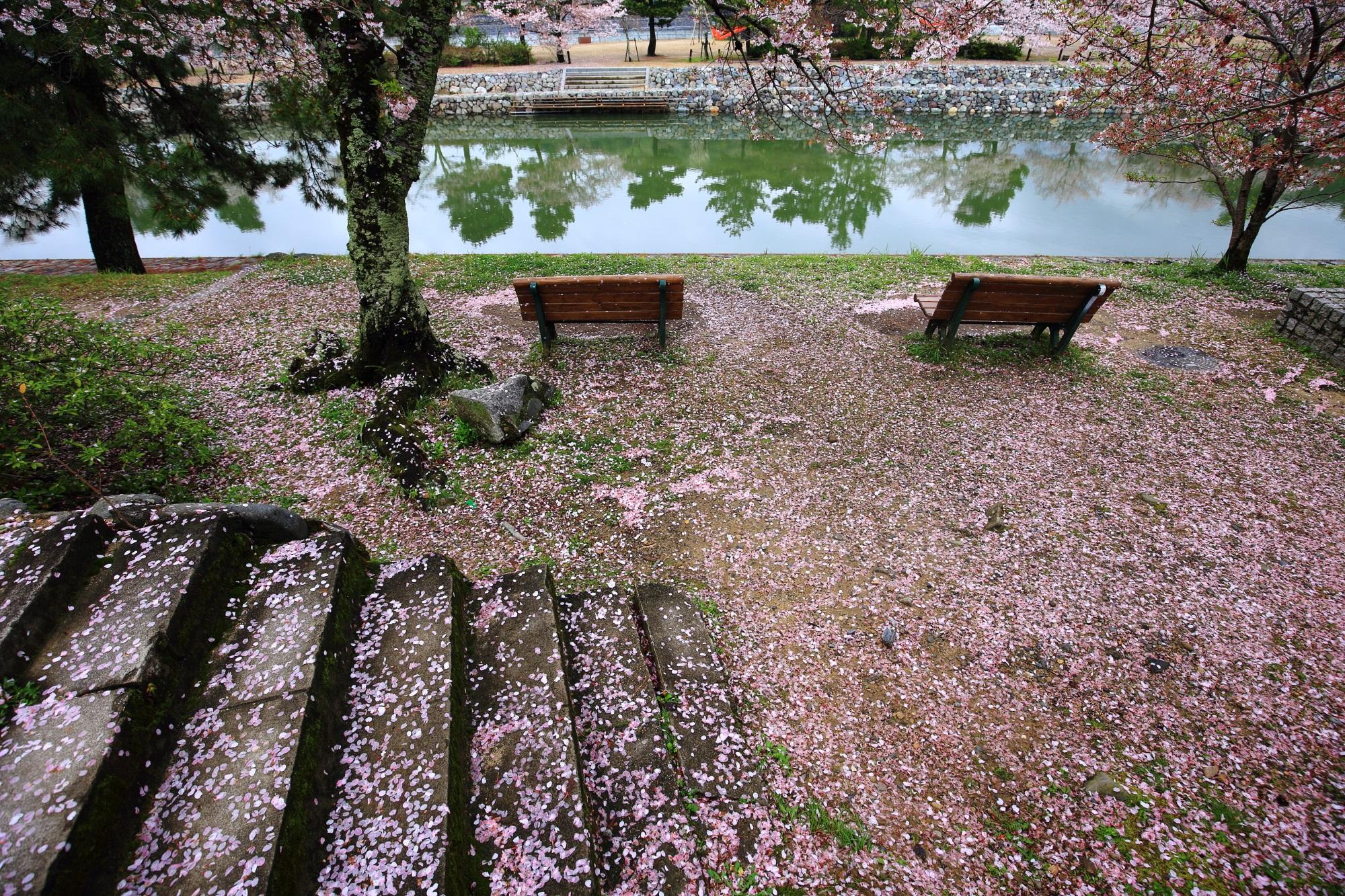 長閑な雰囲気の宇治川をつつむ華やかな散り桜