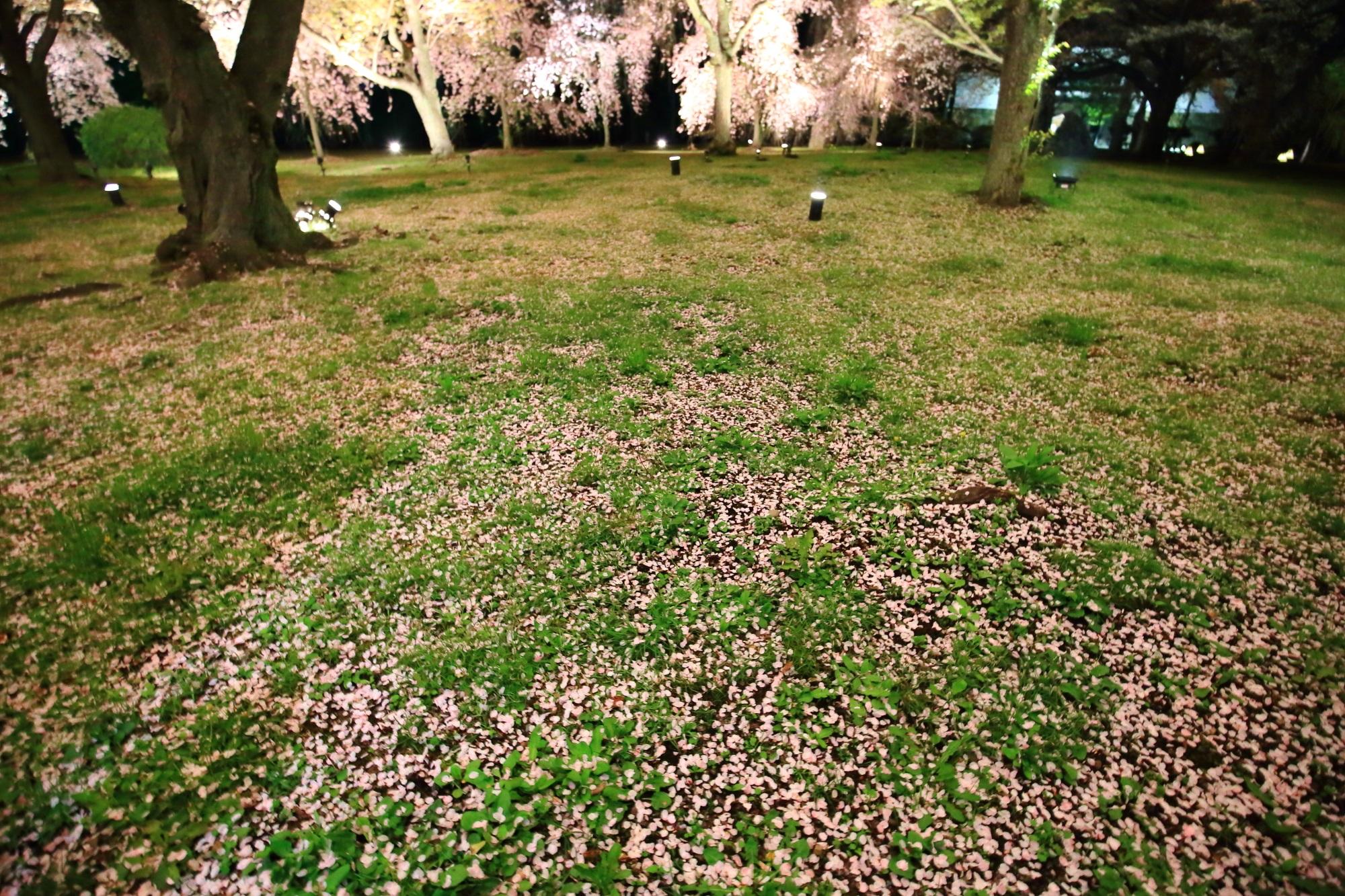 ライトアップされた見事な散り桜