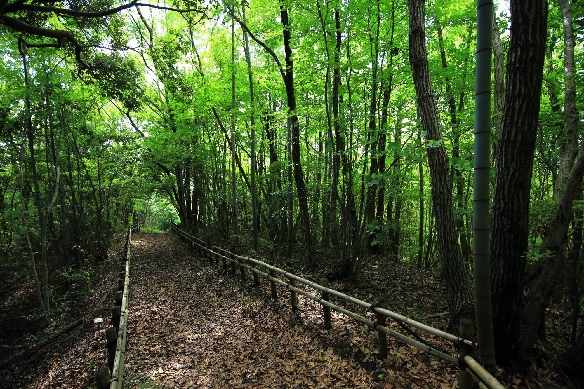 岩船寺の貝吹岩へ続く爽やかな緑につつまれて気持ち良い長い道